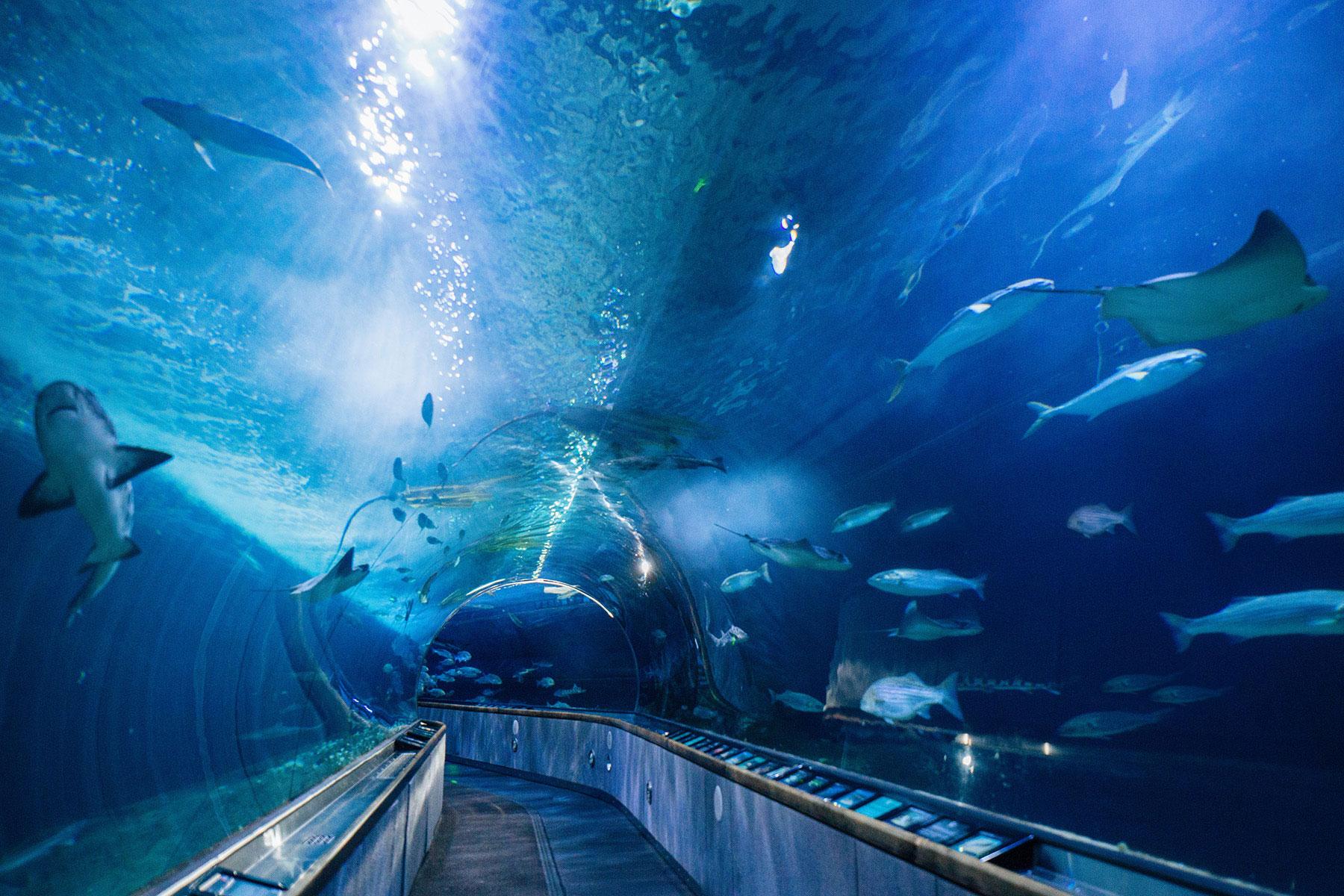 Top 14 aquariums to visit sunset magazine for Site aquarium