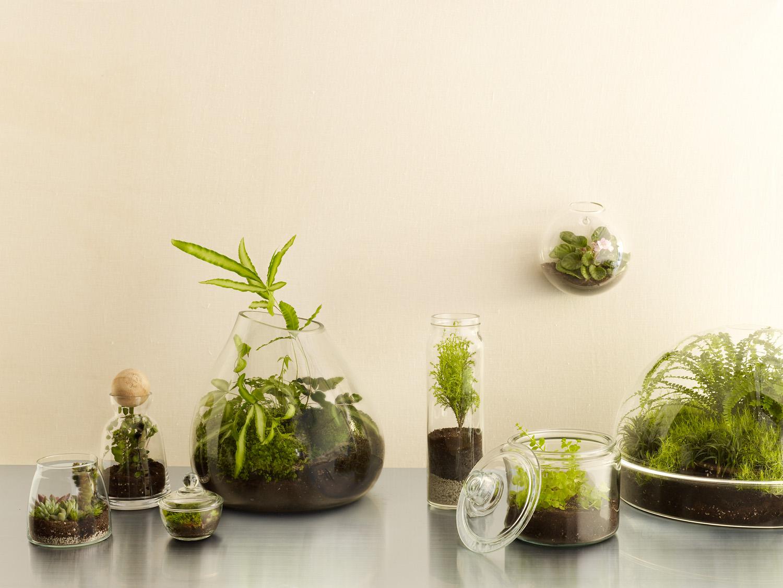 8 cool diy terrariums sunset sunset magazine. Black Bedroom Furniture Sets. Home Design Ideas