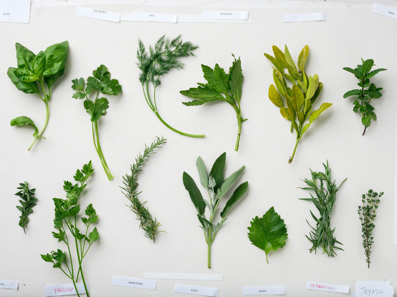 32 Indispensable Herbs - Sunset Magazine