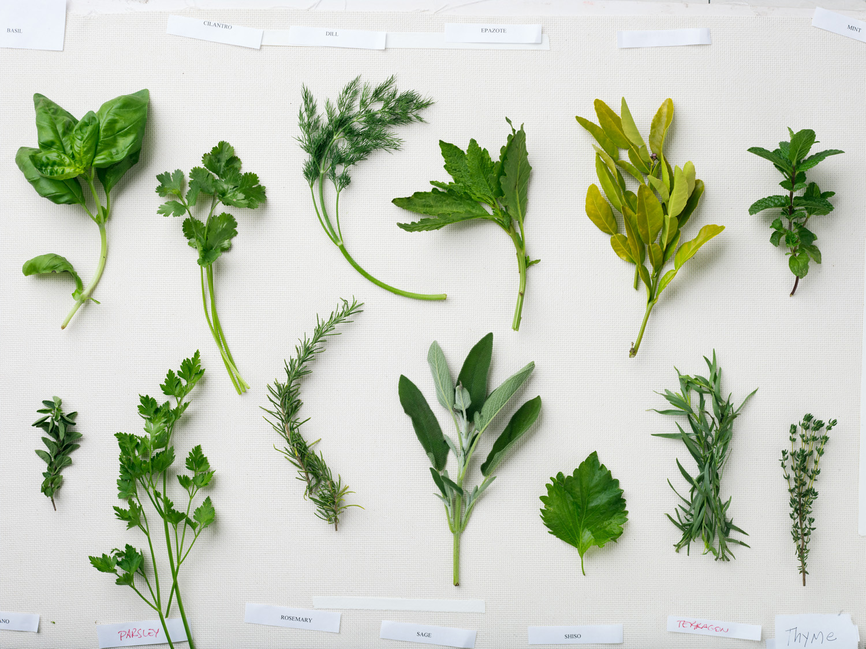 indispensable garden herbs sunset magazine