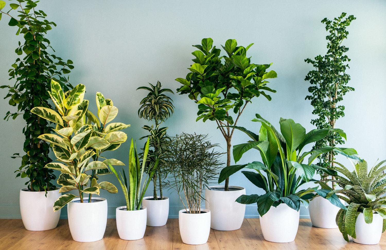 Chic house plants tips on care sunset magazine