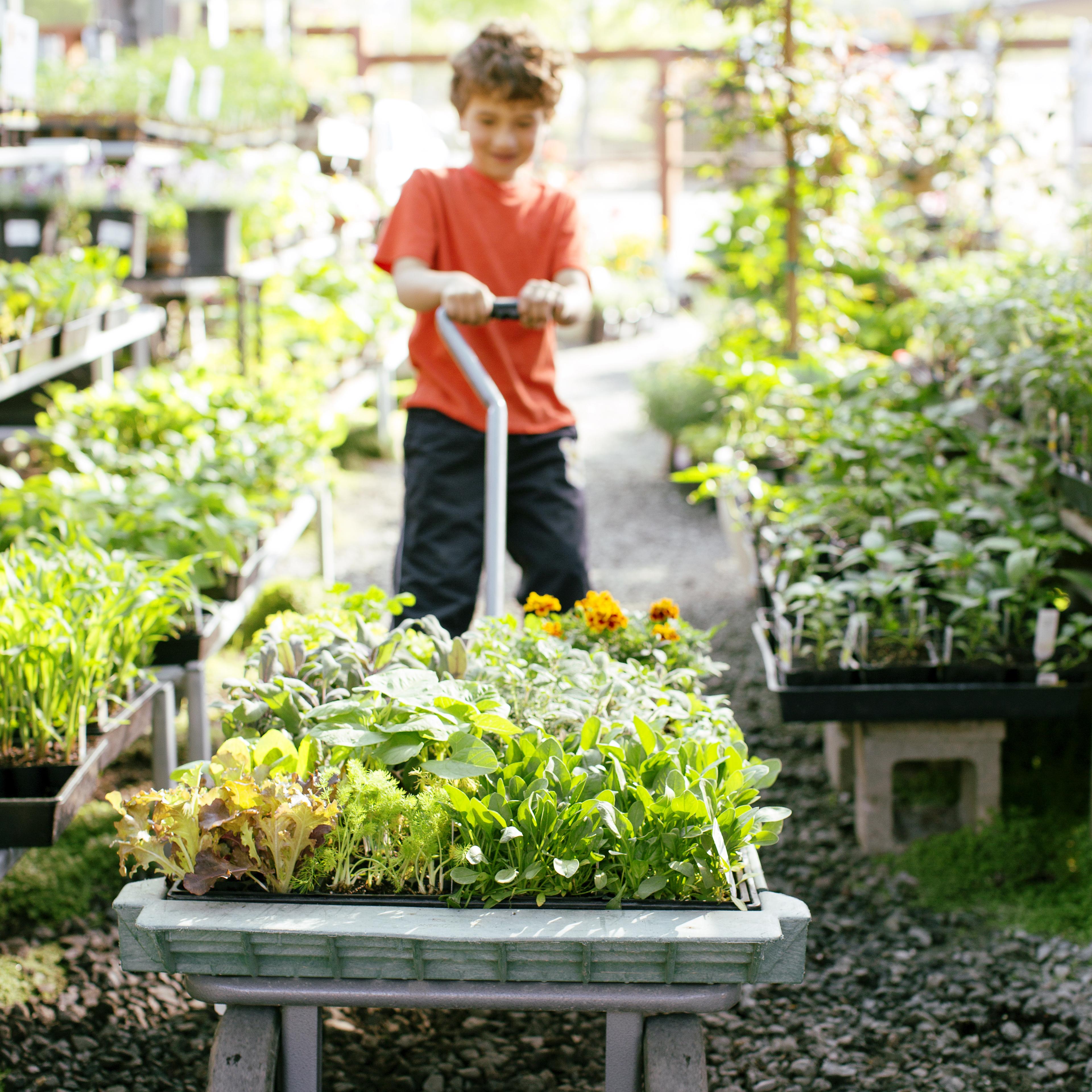 How To Create A Children's Garden