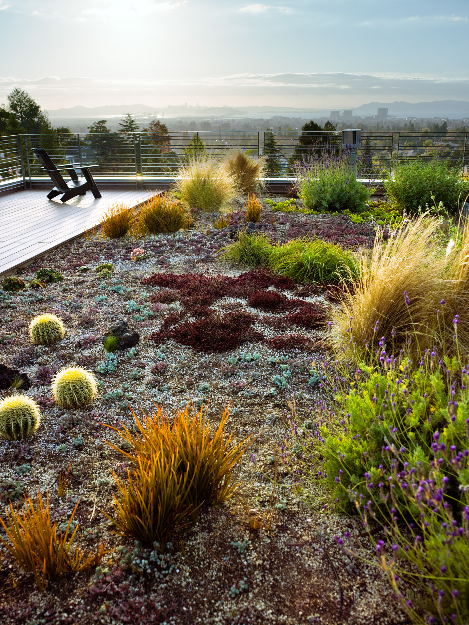 12 Great Drought-Tolerant Plants