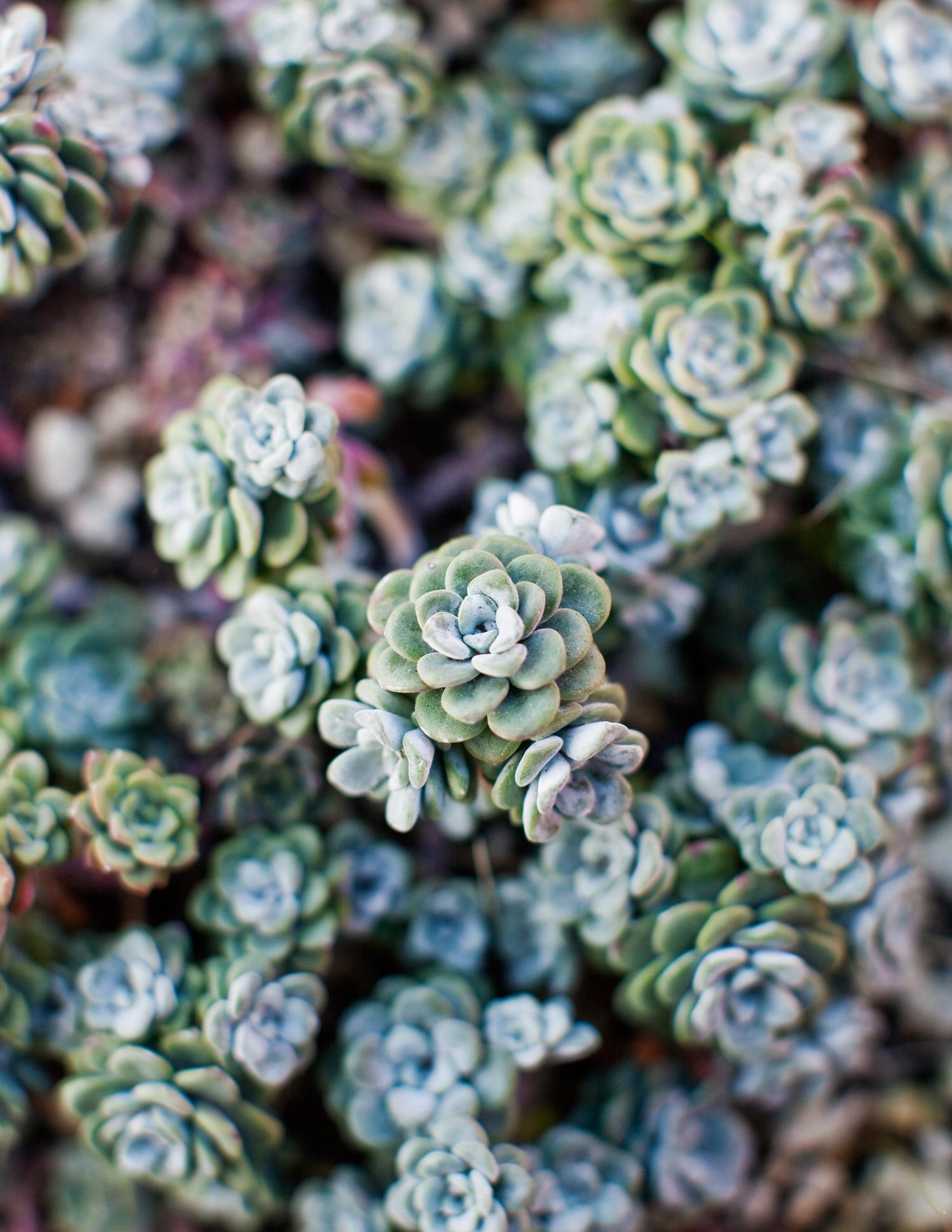 Top Plants For An Easy Garden