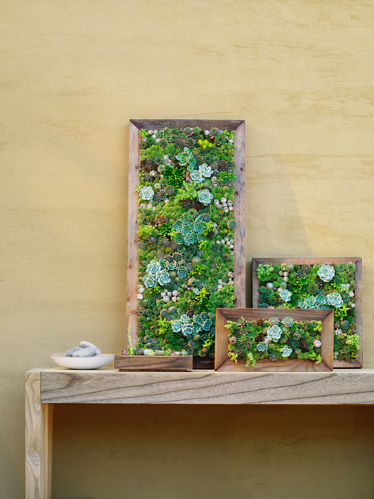 Make Your Own Living Succulent Art - Sunset Magazine