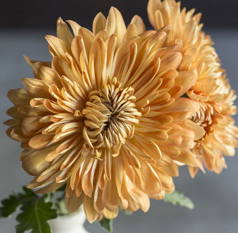 10 Show-Stopping Fall Flowers for Pots