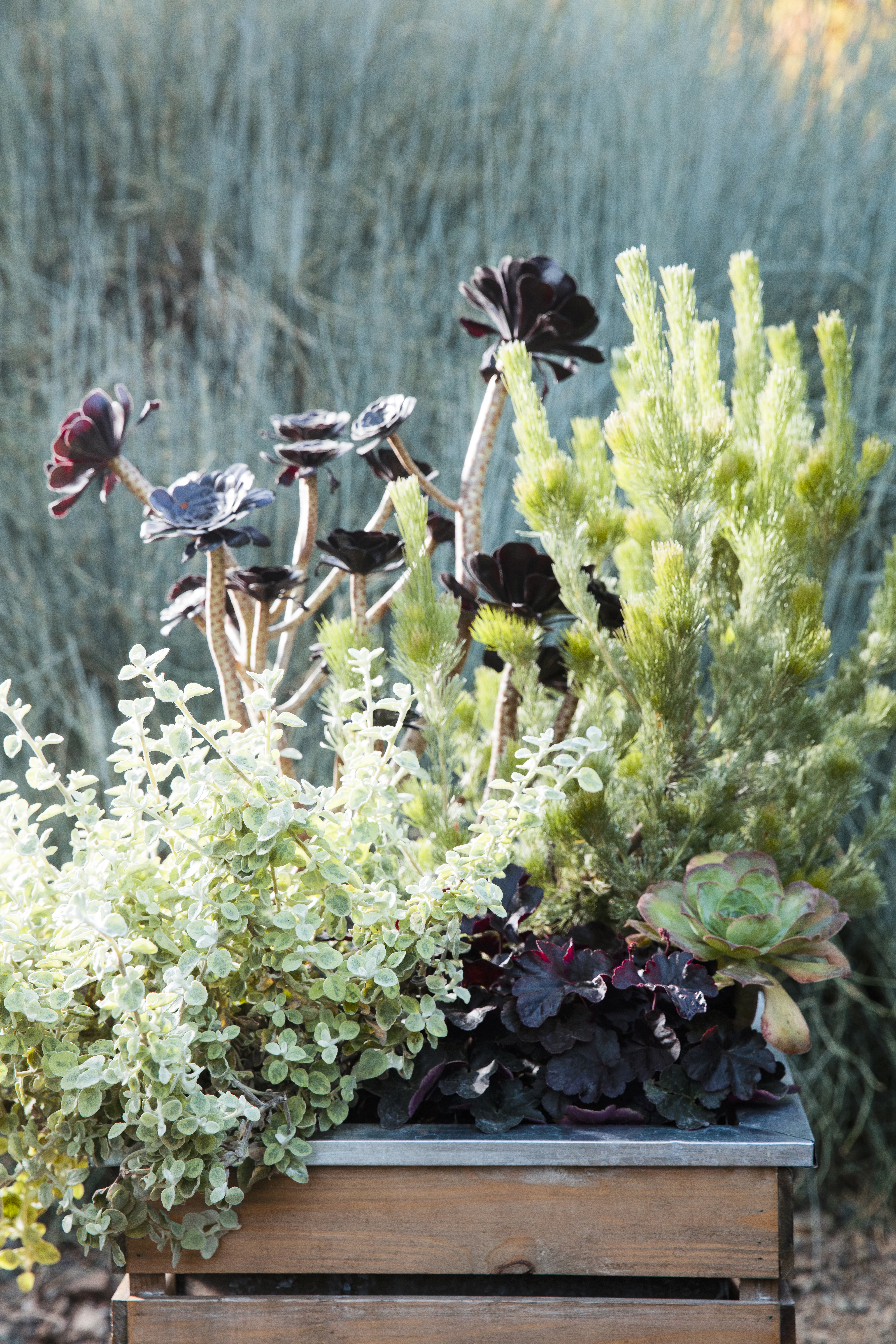 38 Ideas for Succulents in Containers - Sunset Magazine