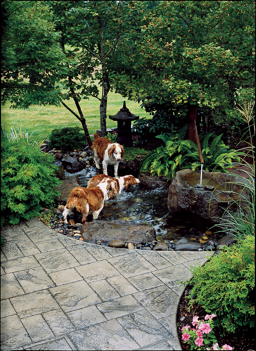 How To Create A Dog Friendly Garden Sunset Magazine
