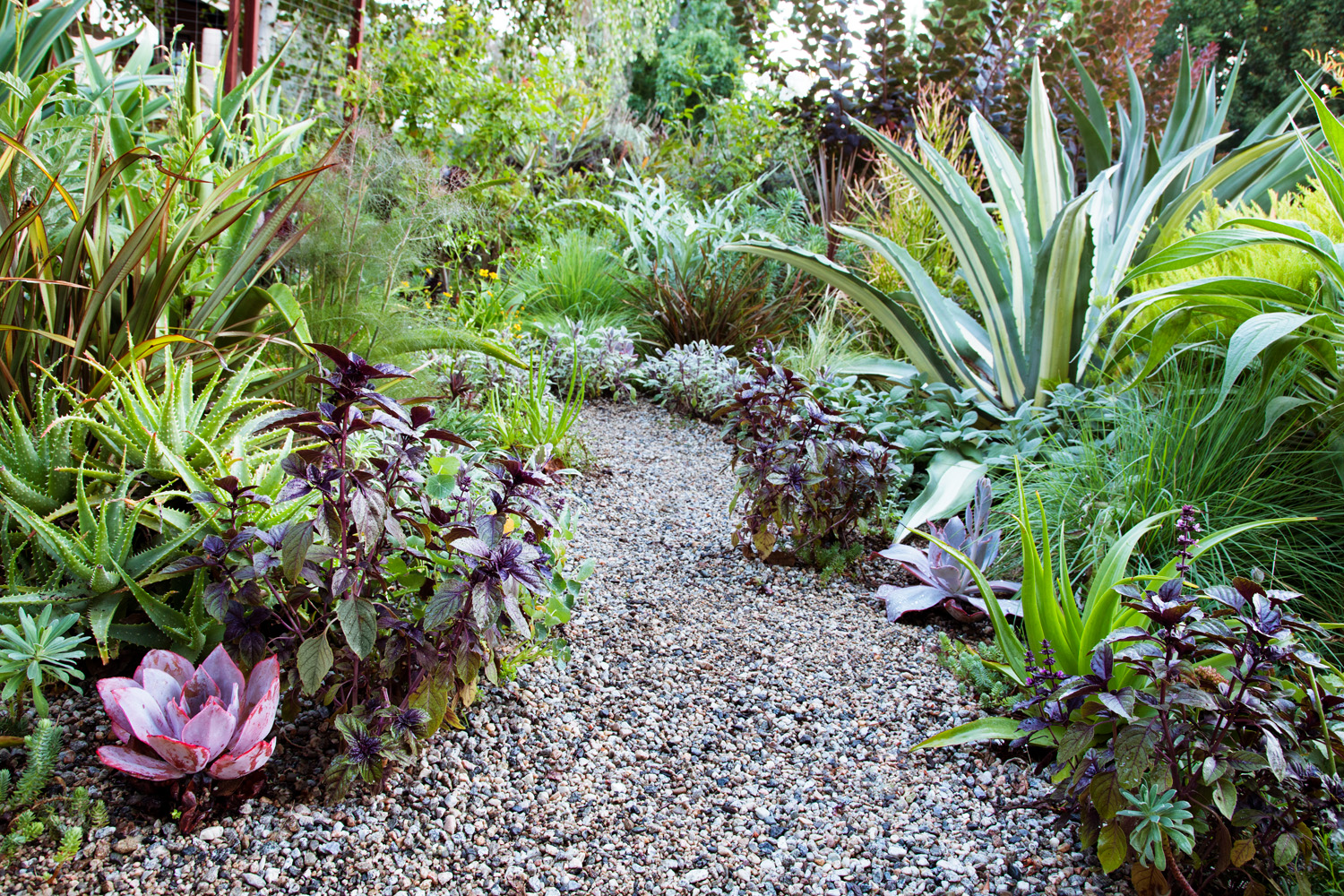 7 edible garden design ideas sunset magazine for Edible garden design ideas