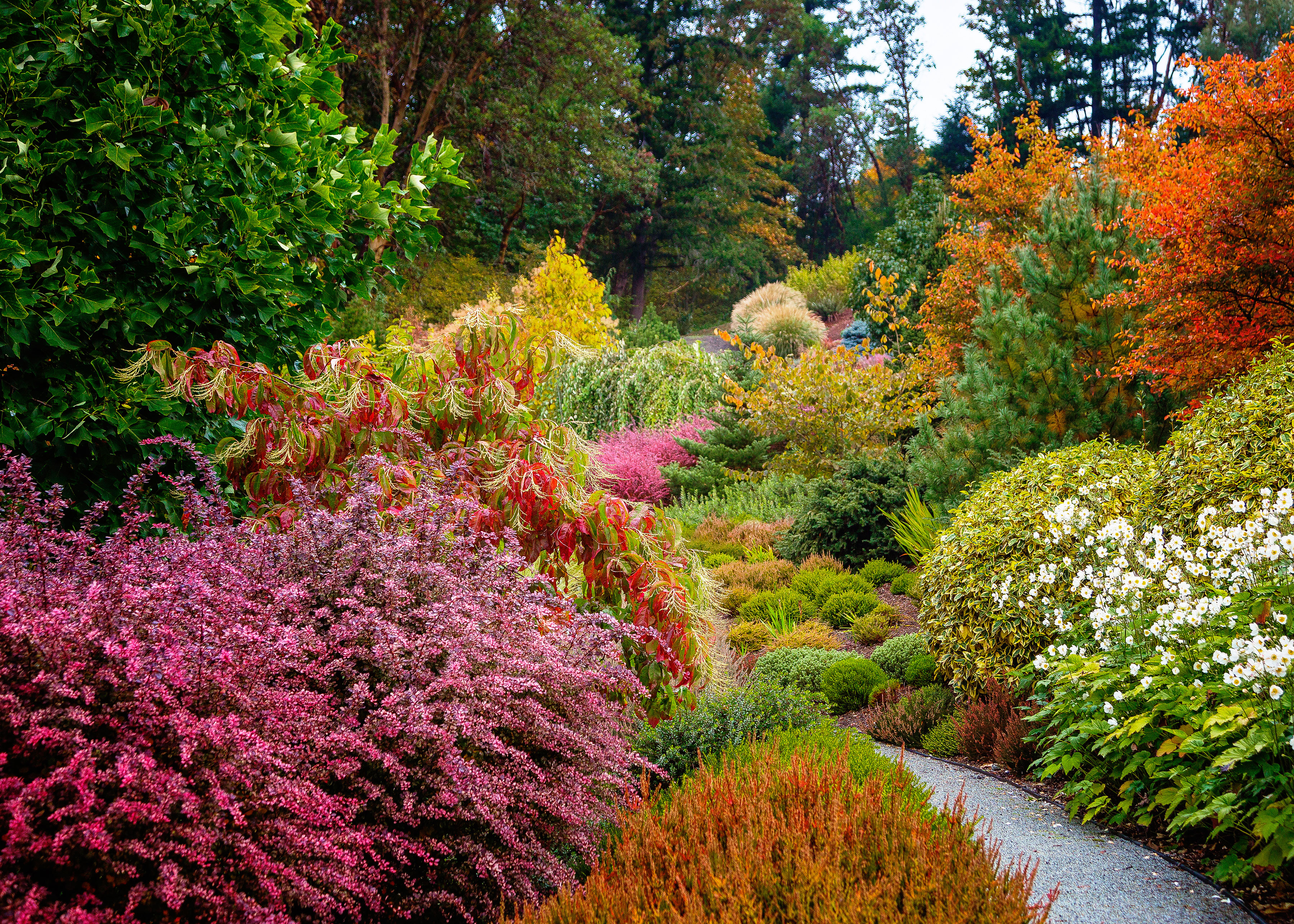 How To Get Great Fall Foliage In Your Garden Sunset Magazine