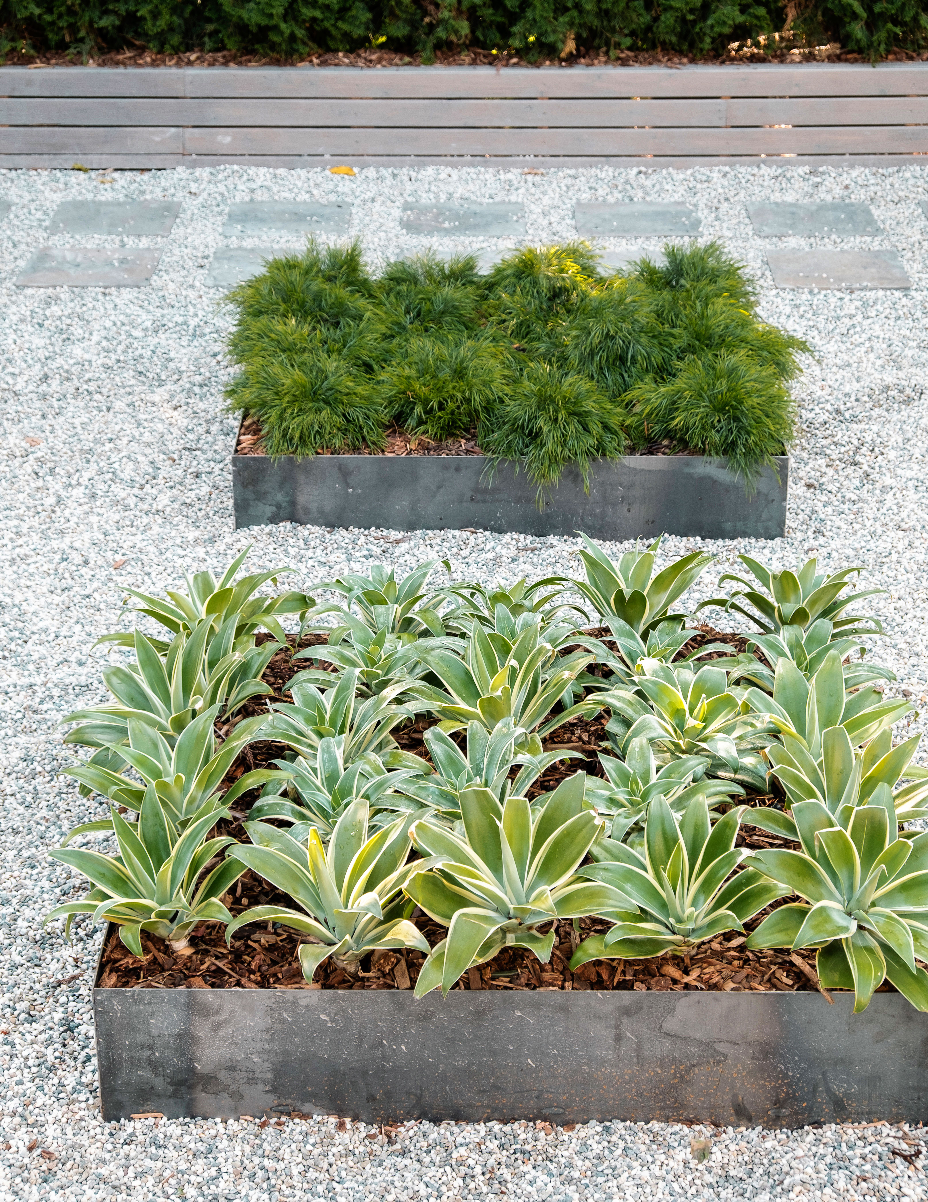 Plant En Masse