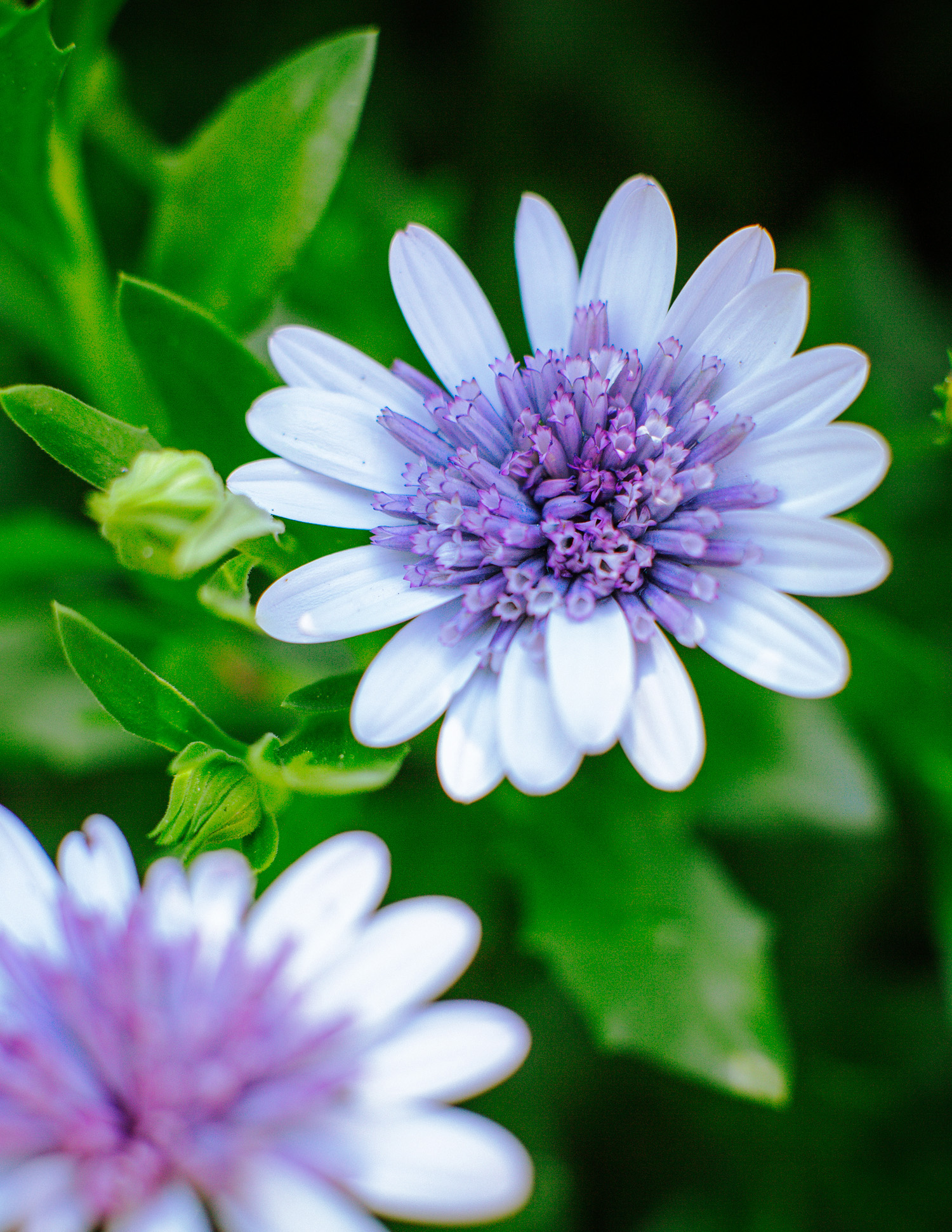 Top 50 Water-Wise Plants - Sunset Magazine