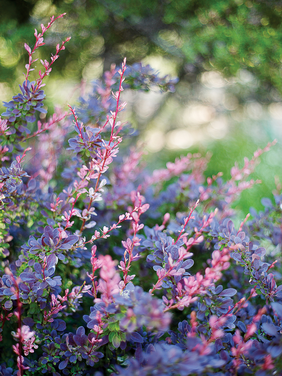 Top Plants for Summer Color