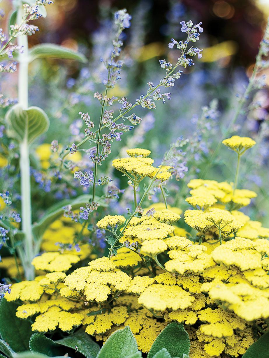top plants for summer color sunset magazine. Black Bedroom Furniture Sets. Home Design Ideas