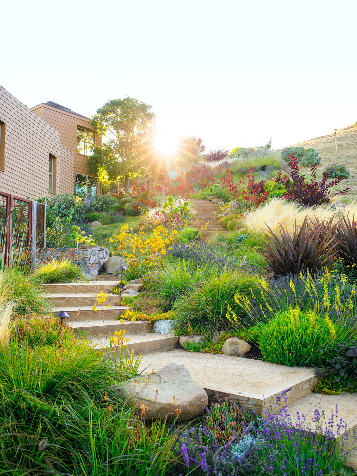 Water Wise Garden Design Guide Sunset Magazine