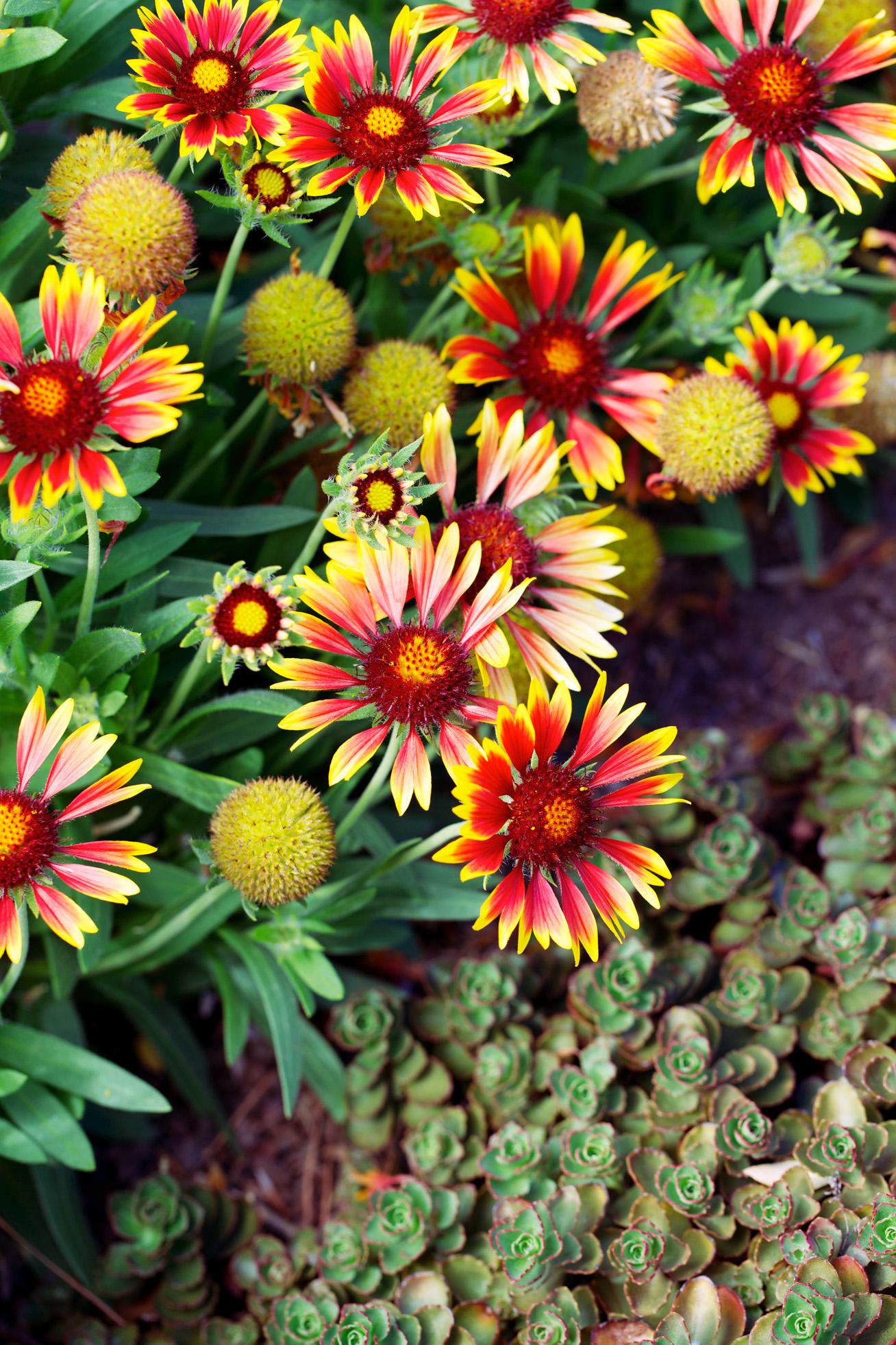 Top water wise plants sunset magazine mightylinksfo