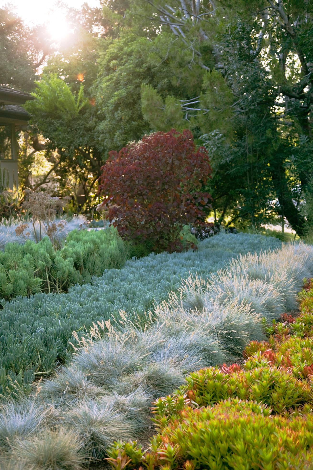 water wise garden designs. Idea to steal  Grow in rows Water Wise Garden Design Guide Sunset Magazine