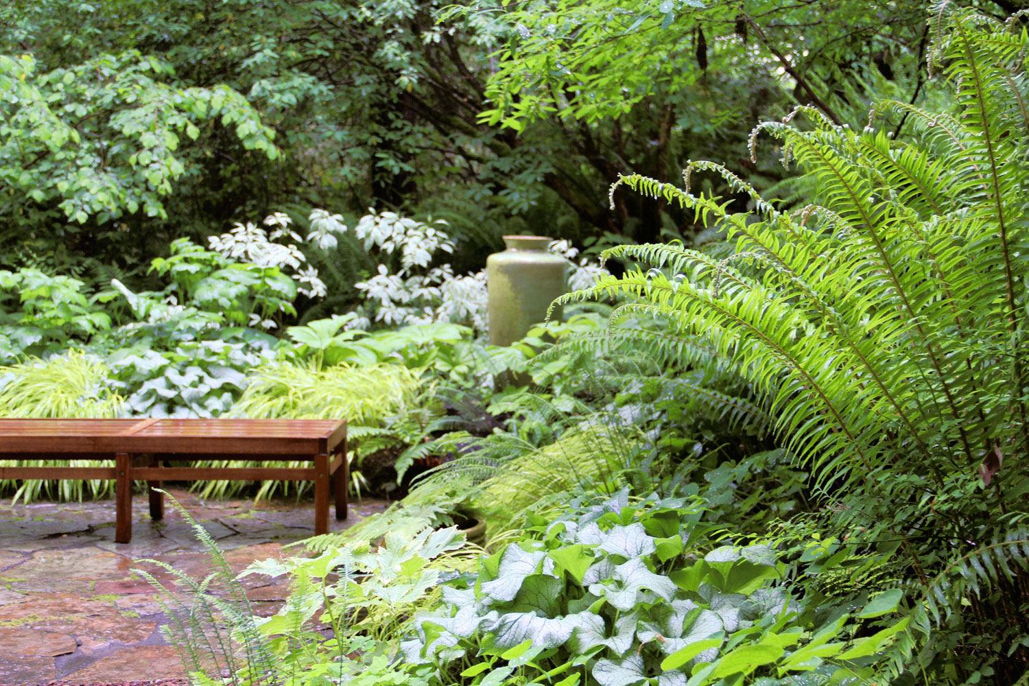 Fern Garden Ideas Best ferns for a low water garden sunset magazine planting care tips workwithnaturefo