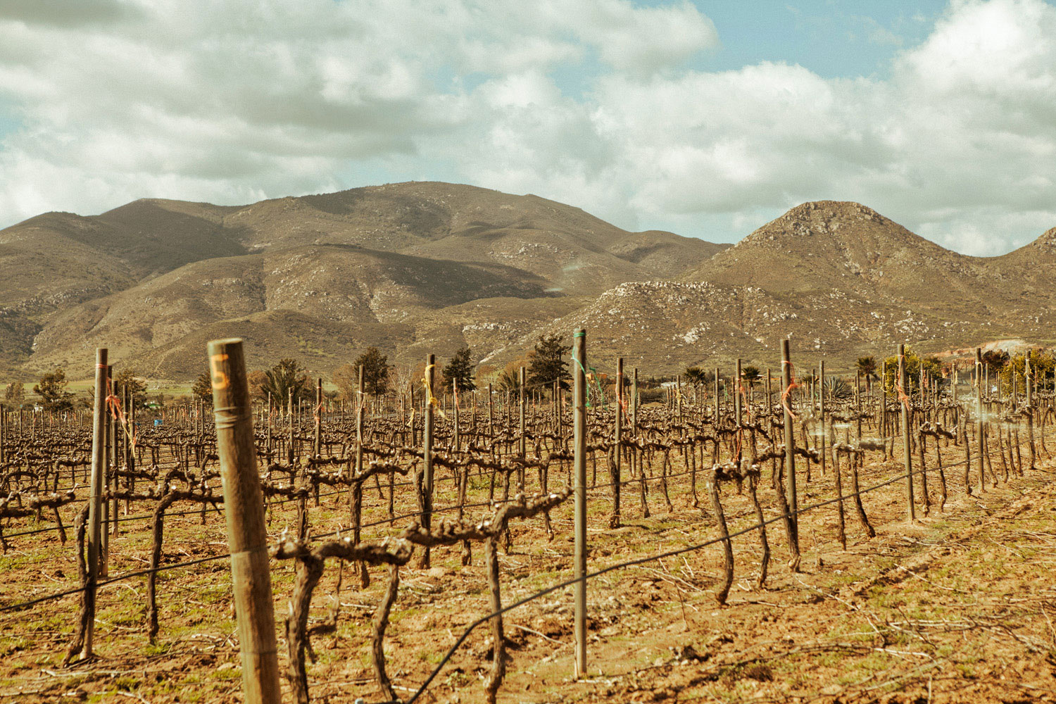 Top wine regions in unusual corners of the West