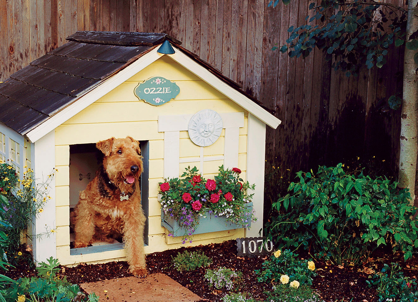 Landscaping for Dogs - Sunset Magazine