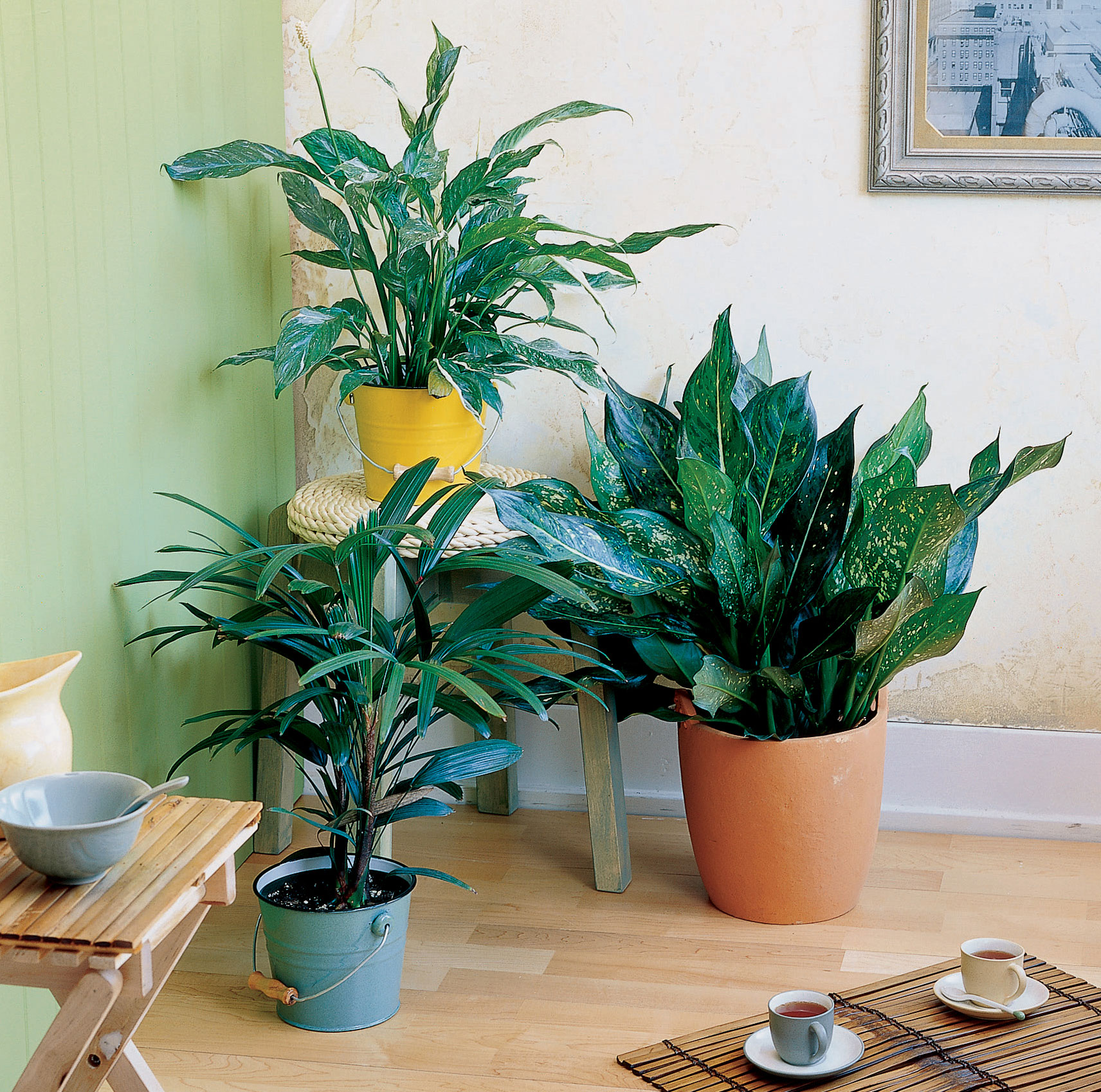 Easy care houseplants sunset magazine sunset magazine for Easy care flowers for garden