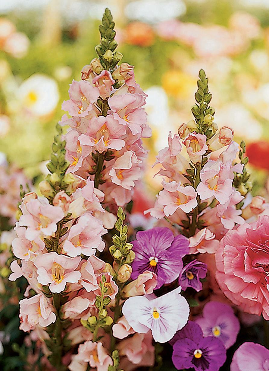 17 Best Plants For Cool Season Color Sunset Magazine