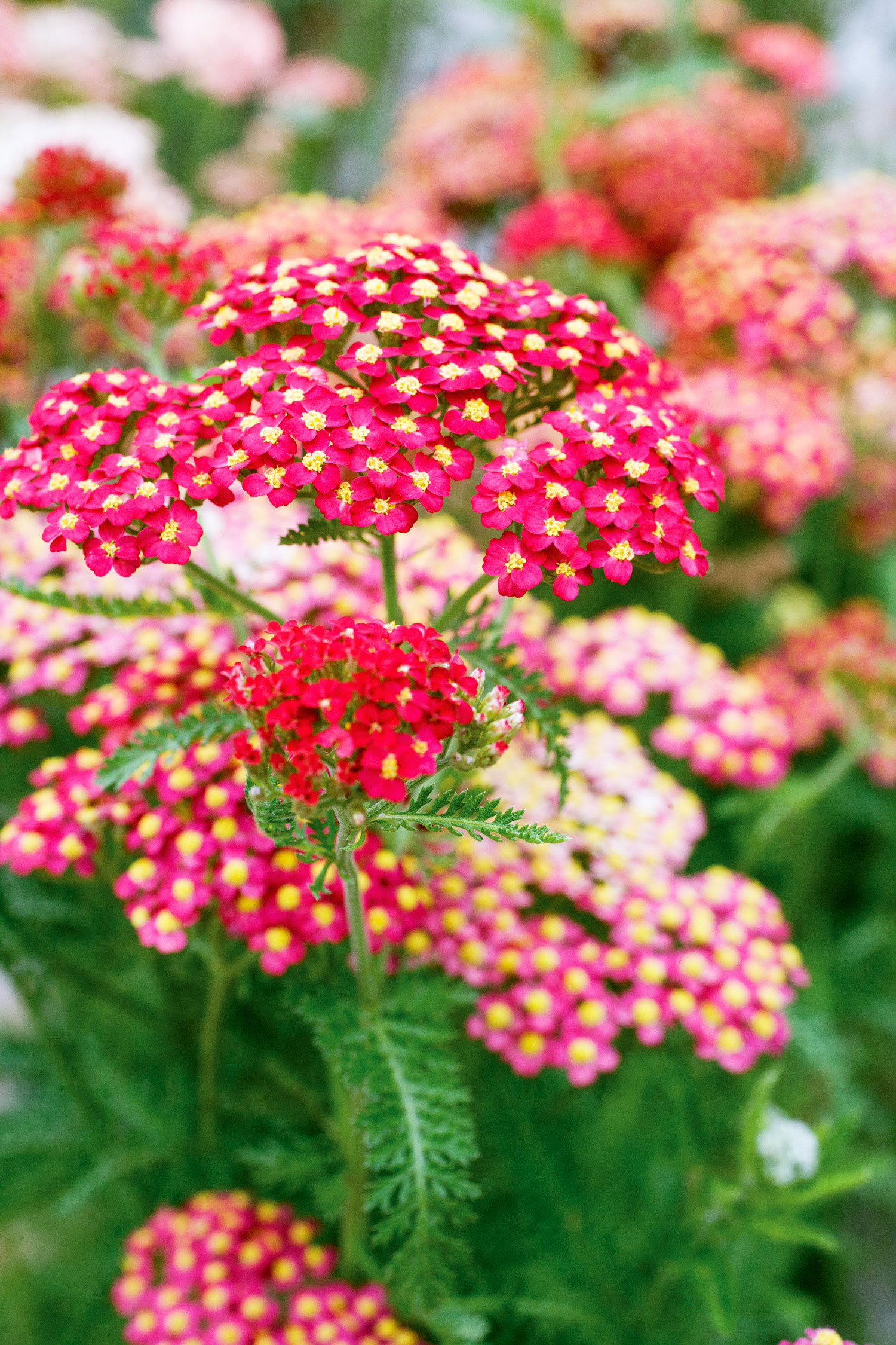 Top plants for your fall garden sunset magazine perennials flowers mightylinksfo