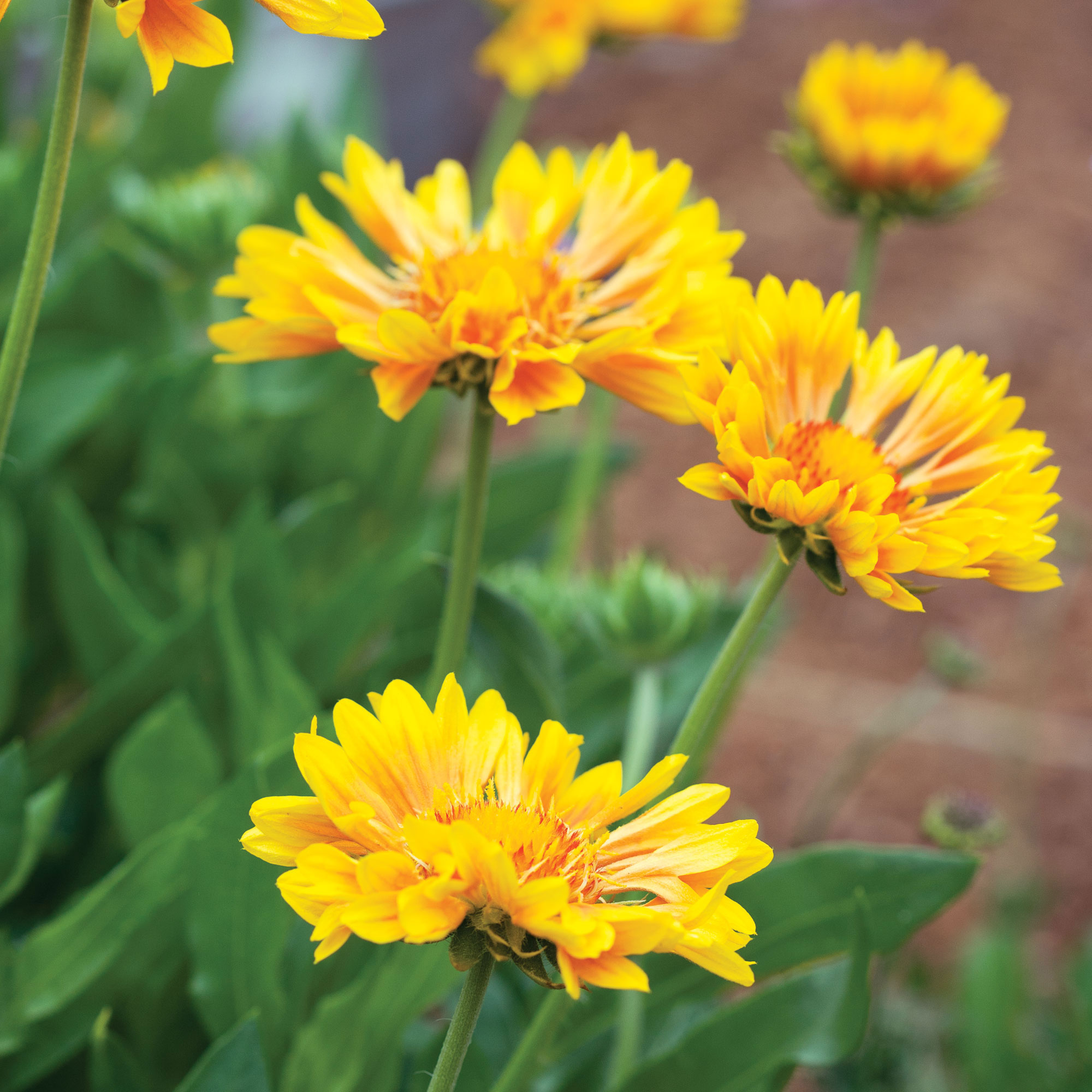 16 Flowers To Paint Your Garden Yellow