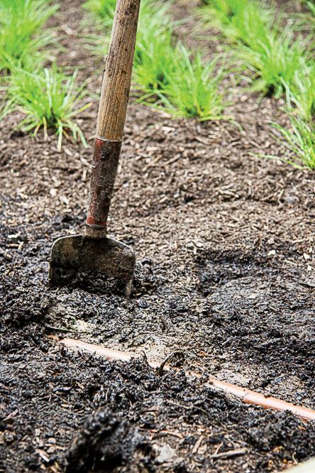 No Mow Lawn Dig