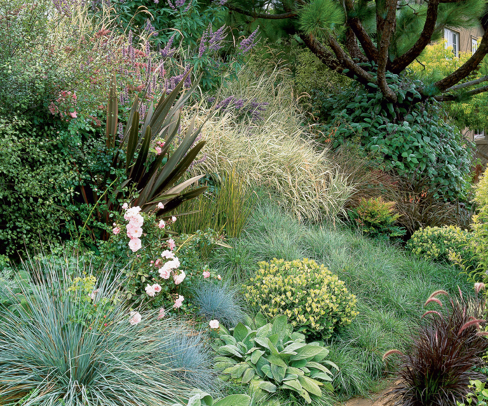 Grasses For Landscaping Gorgeous grasses sunset magazine workwithnaturefo