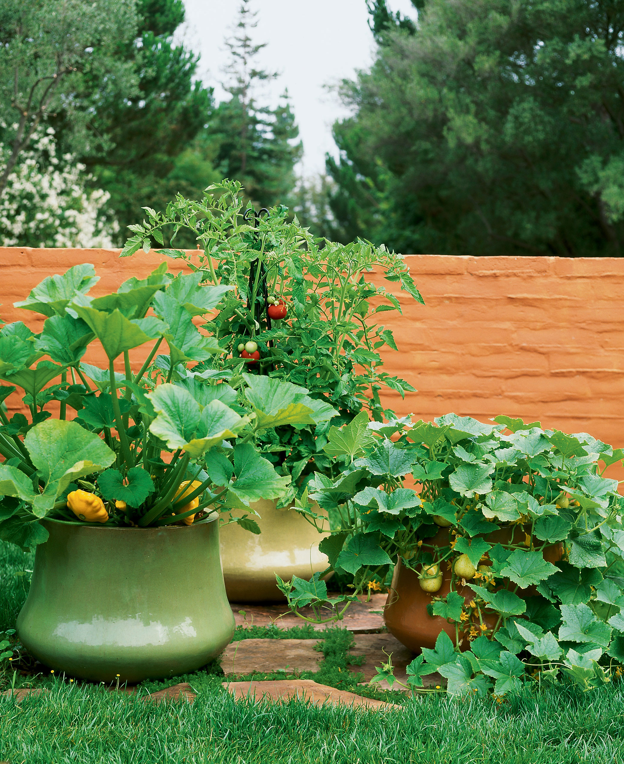 Growing vegetables in pots sunset magazine - Best vegetables for container gardening ...