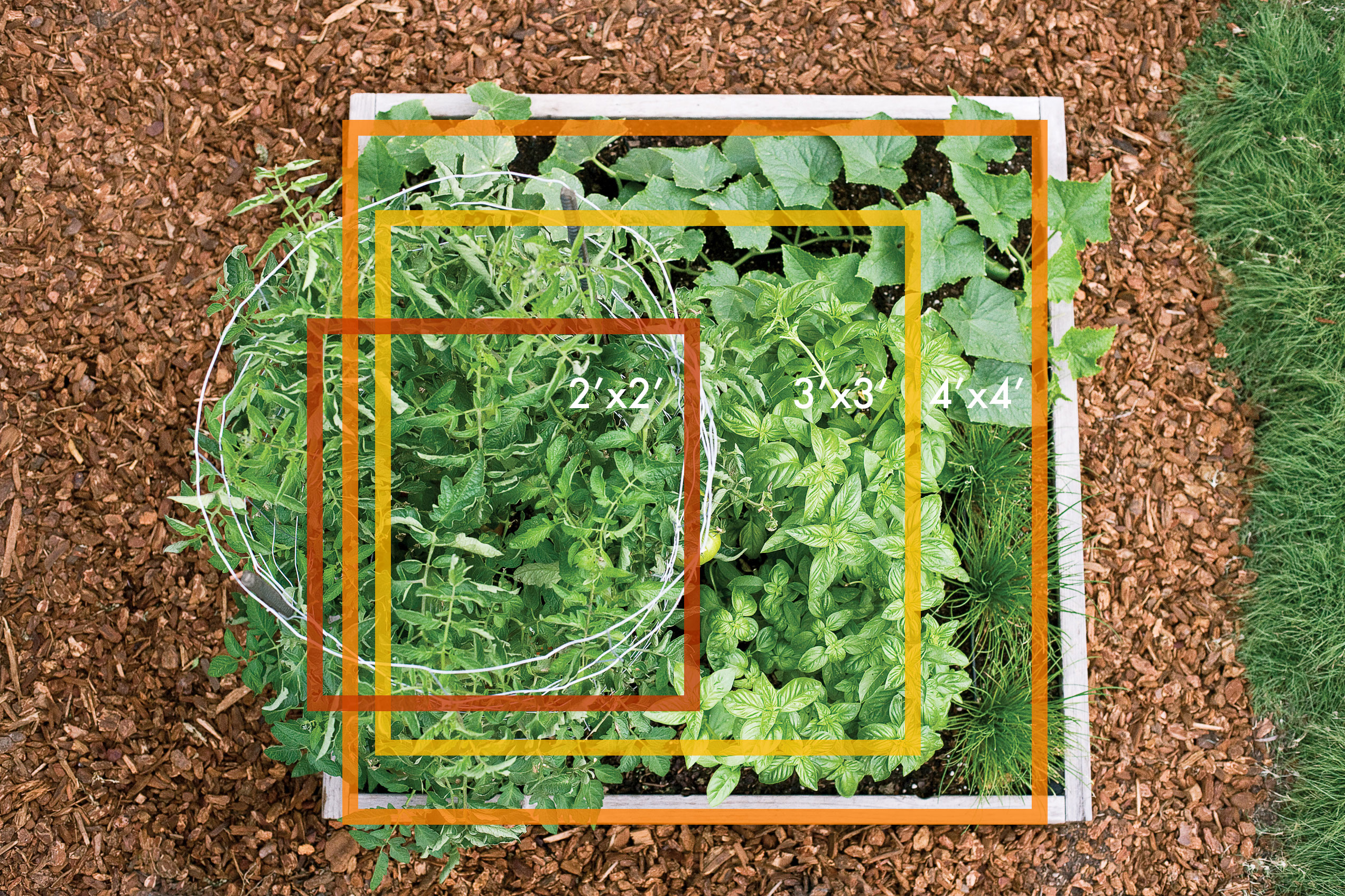 How to Grow Veggies in 2–4 Square Feet