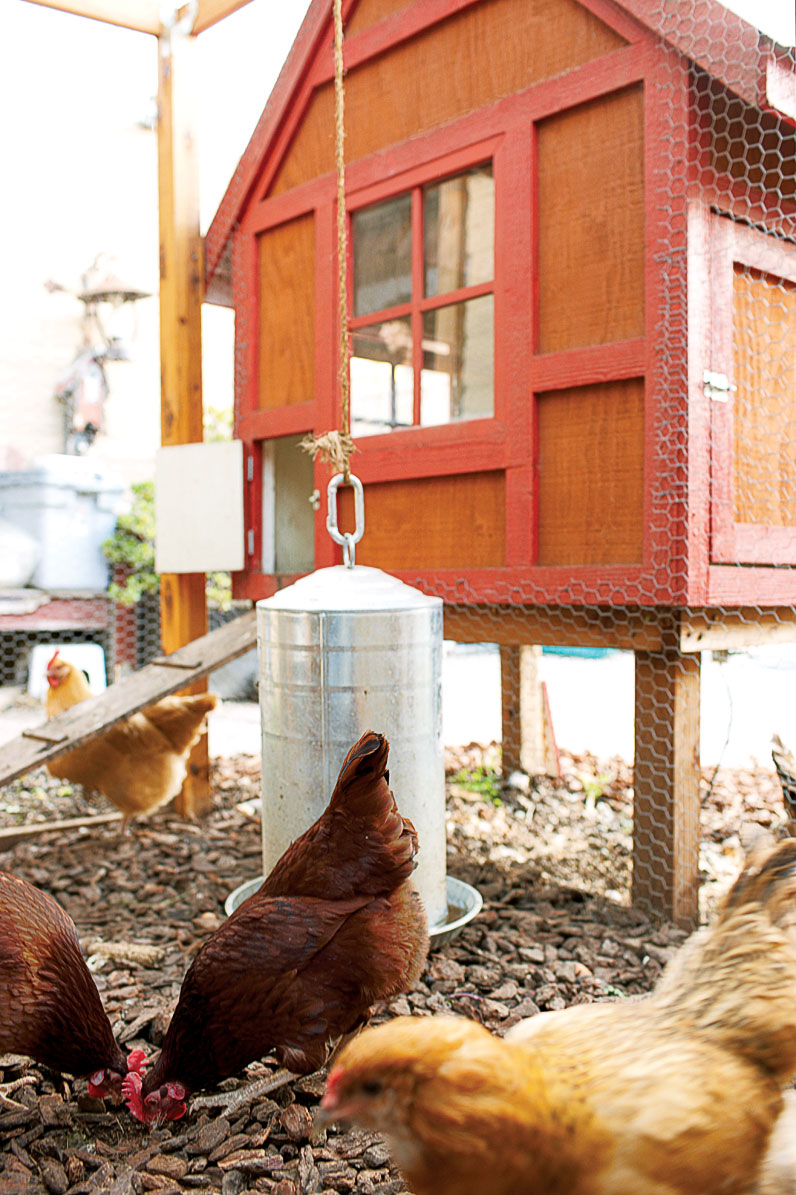 The chicken coop is the new doghouse