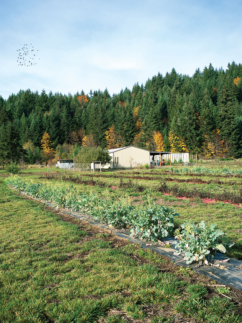 Dairy Creek Farm and Produce