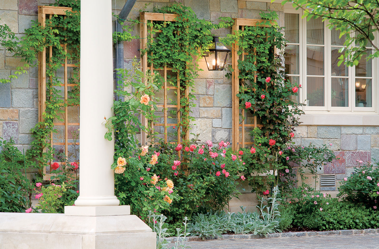 Use these simple step by step directions to construct a for Wall trellis ideas