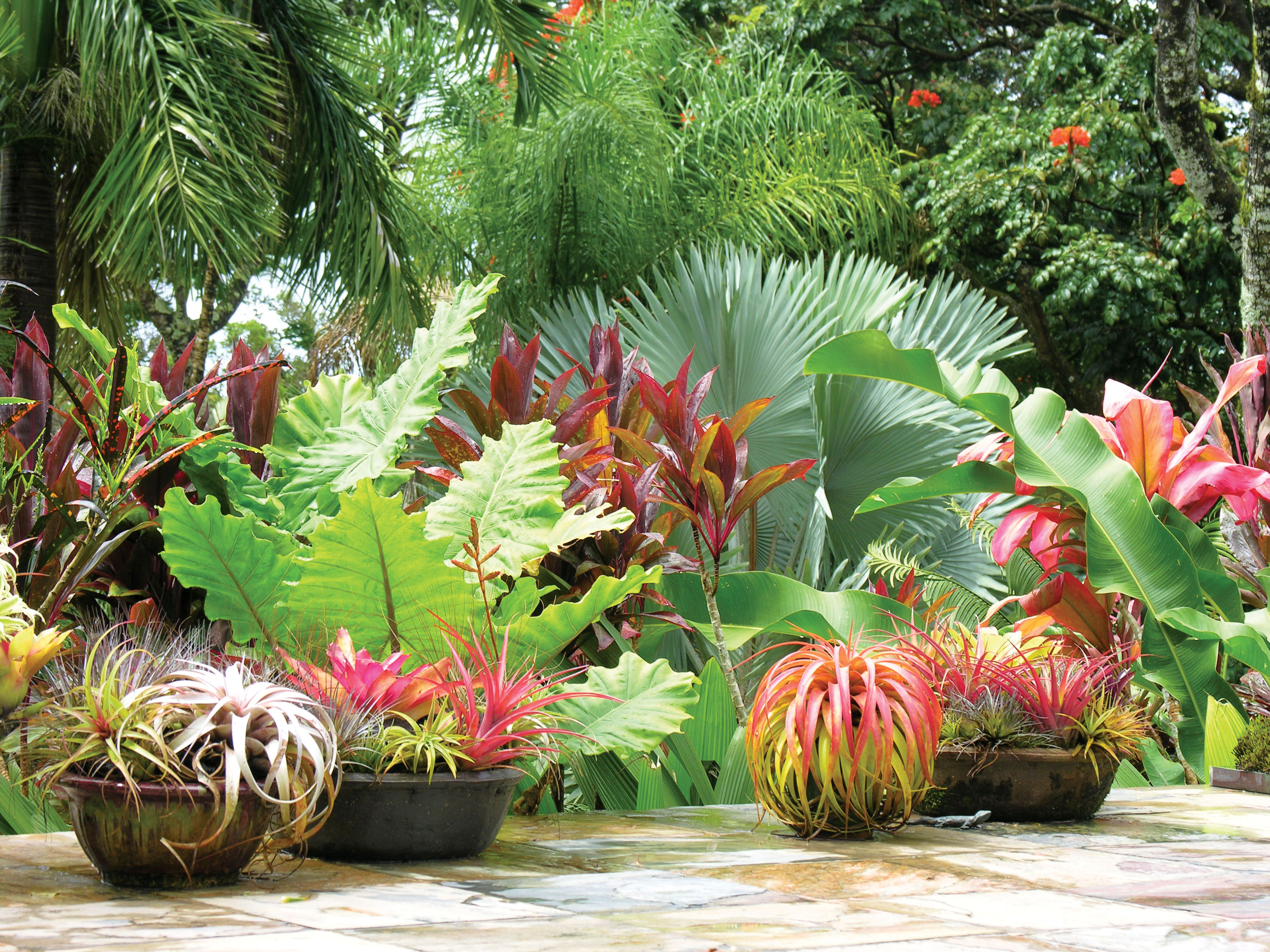 The plants you ll want to grow this year plus great for Jardin tropical plantas