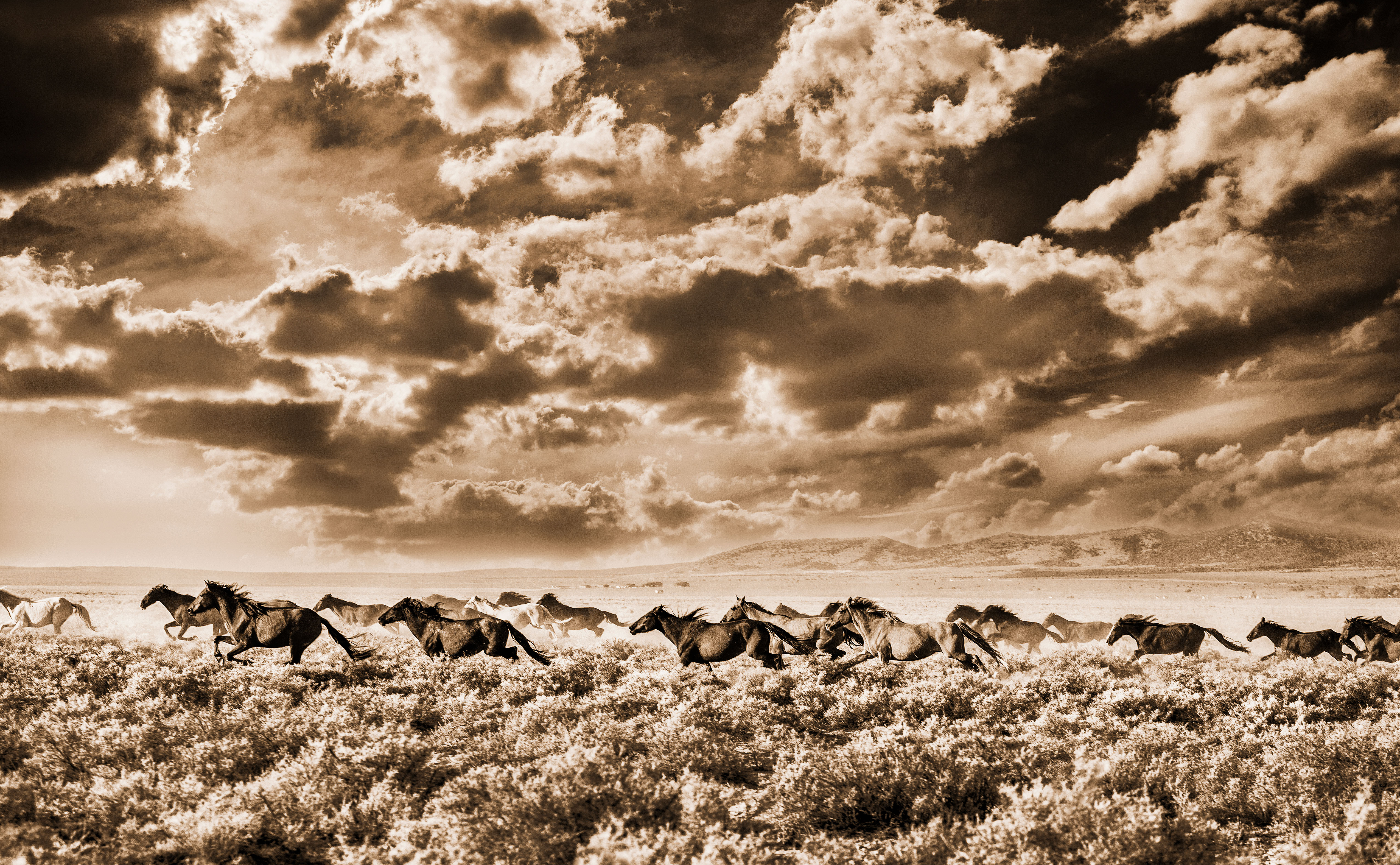 The Fight Over America's Wild Horses - Sunset Magazine