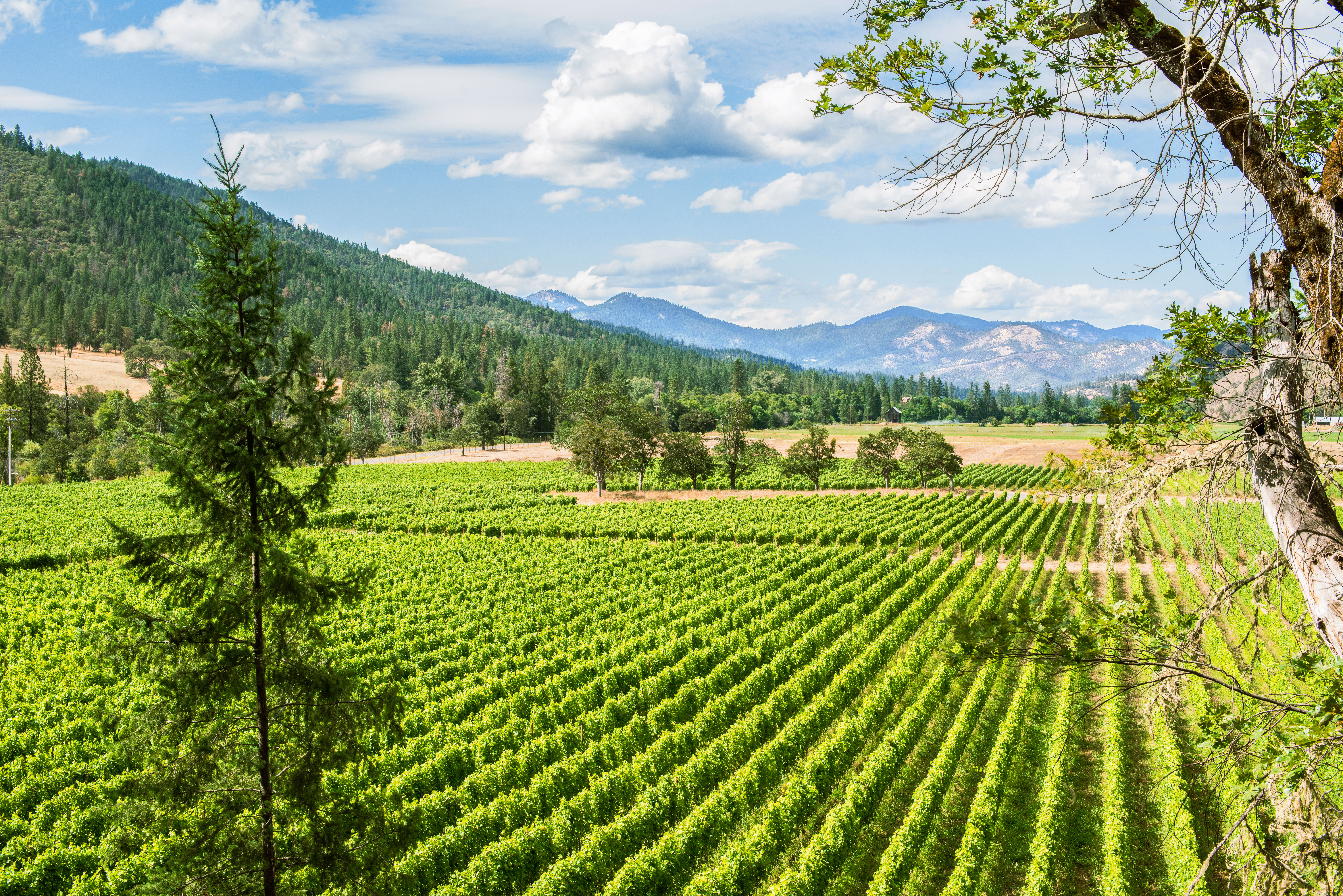 Southern Oregon Wine Country Guide Sunset Magazine