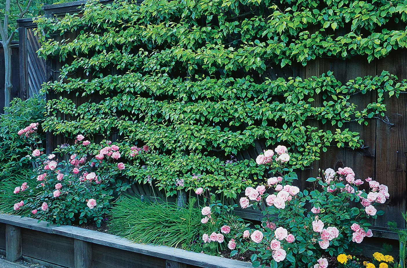 Espalier made easy