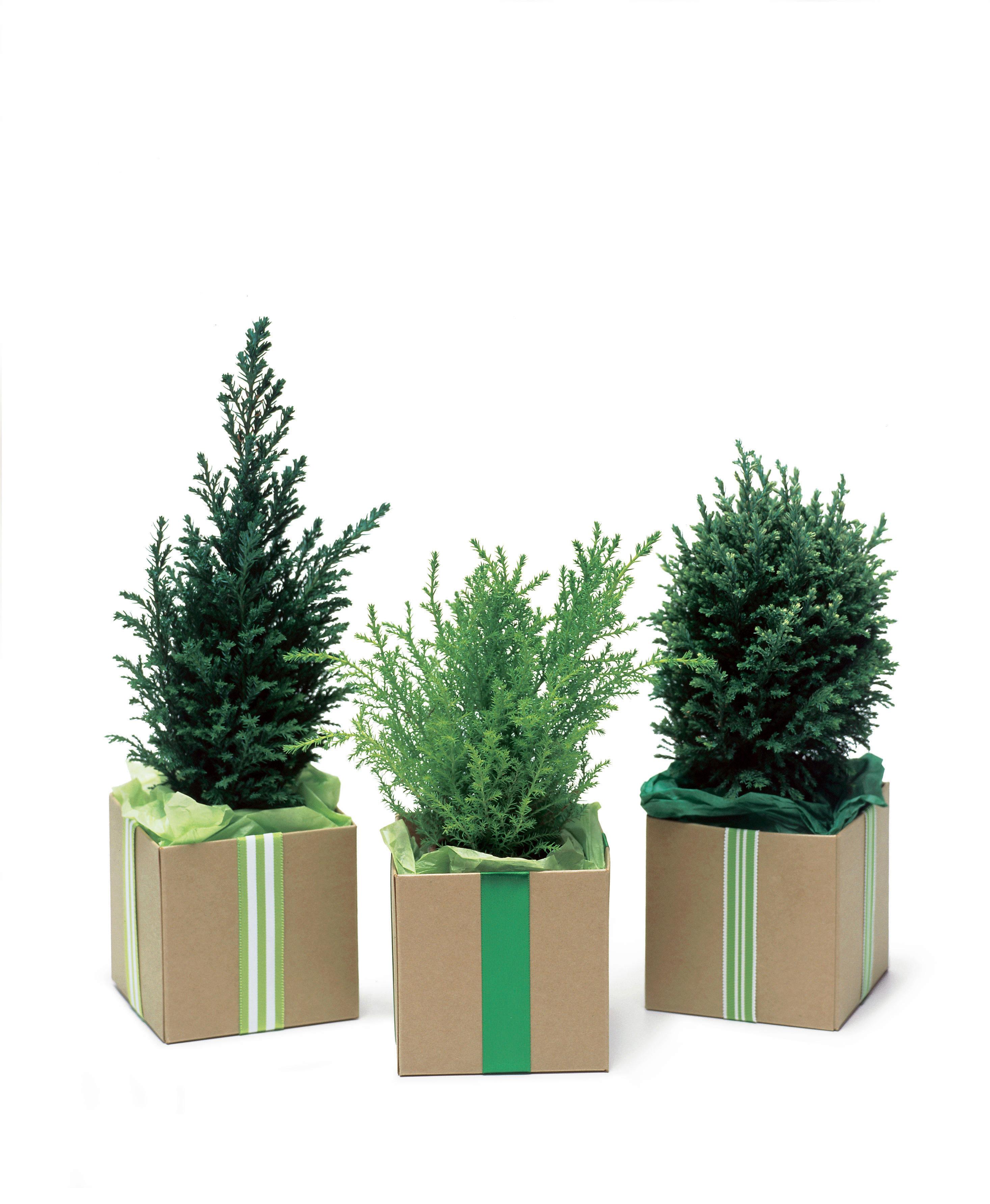 15 Perfect Gift Plants - Sunset Magazine