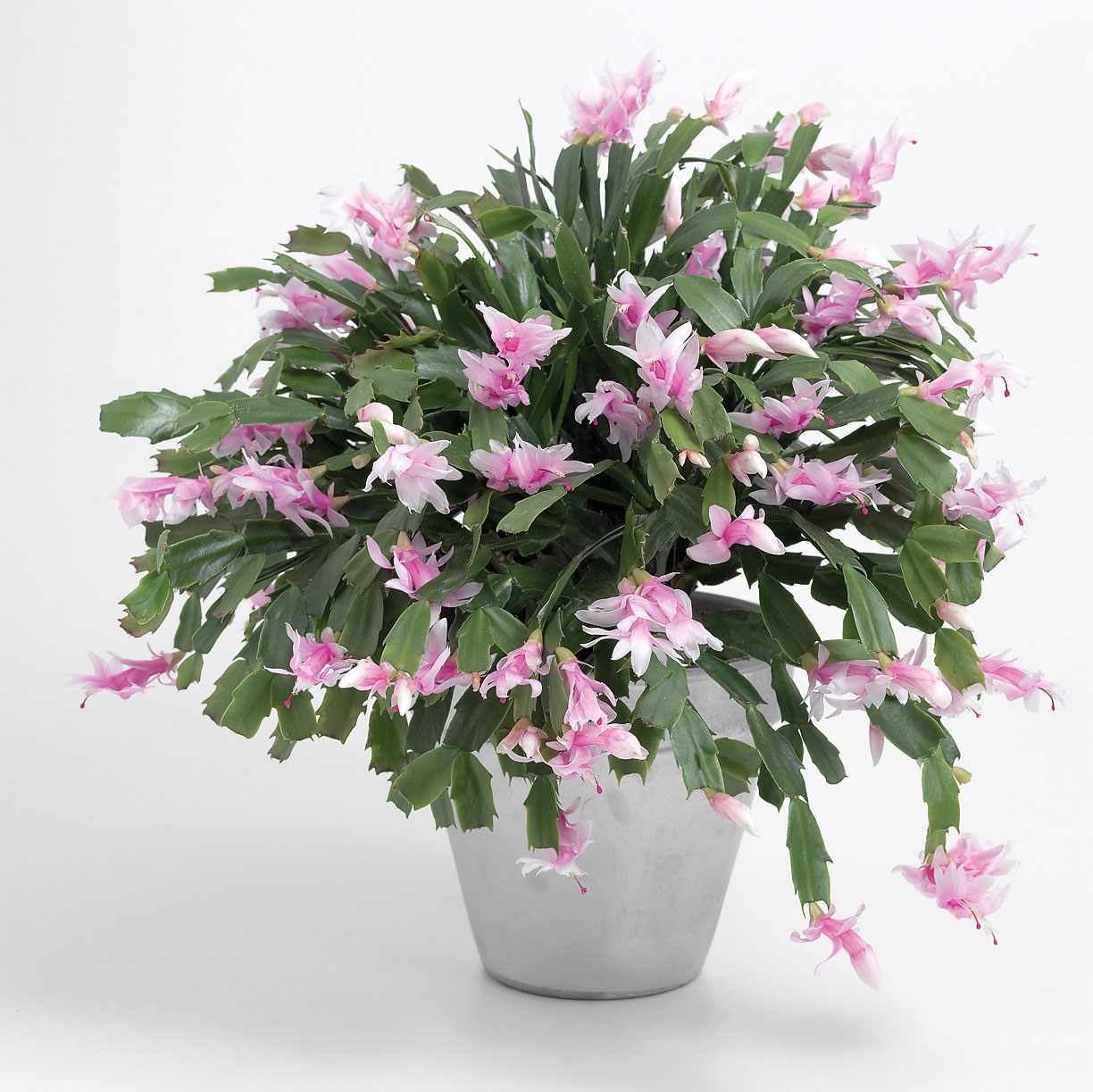 15 Perfect Gift Plants