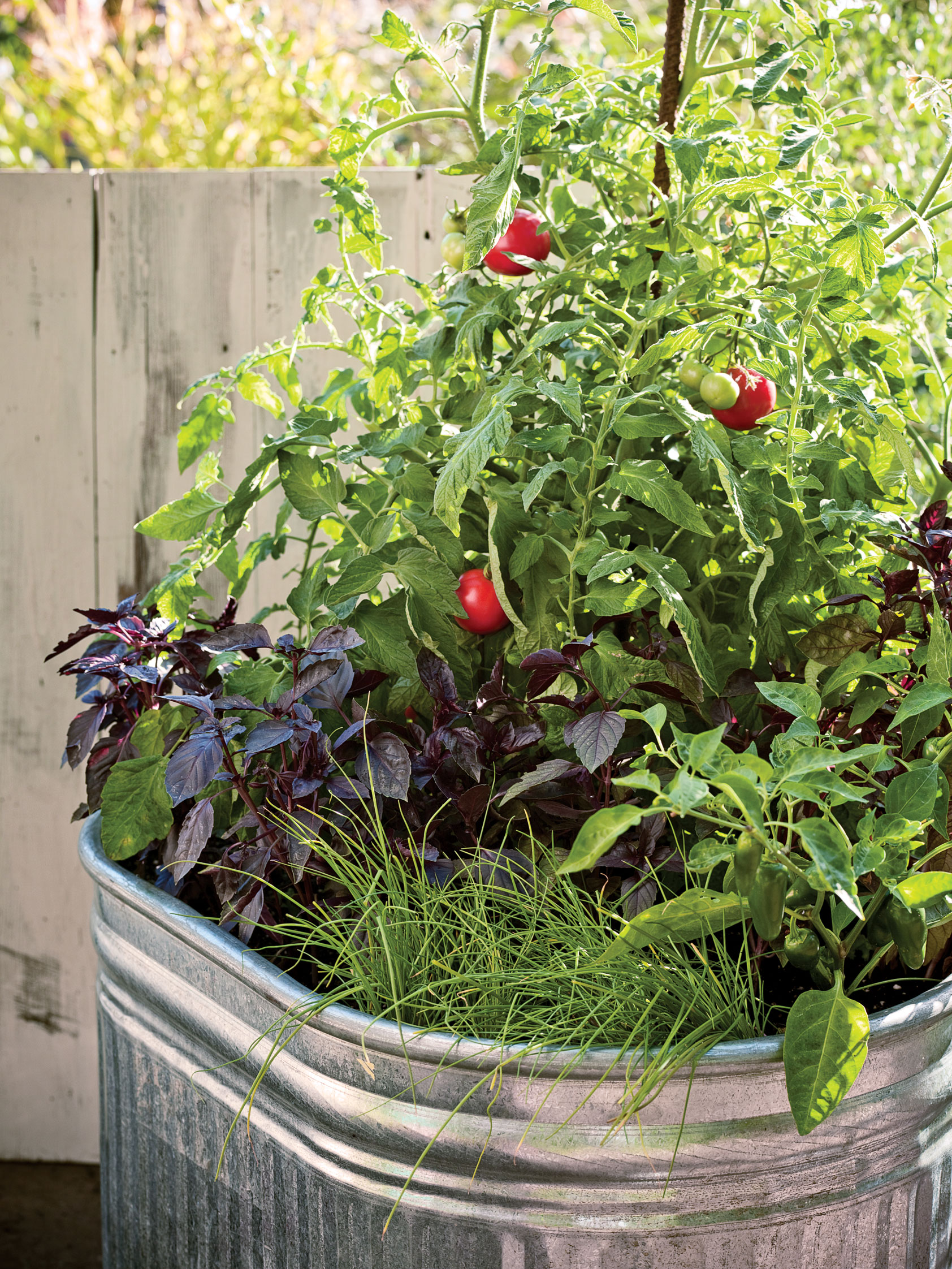 Plant A One Pot Vegetable Garden