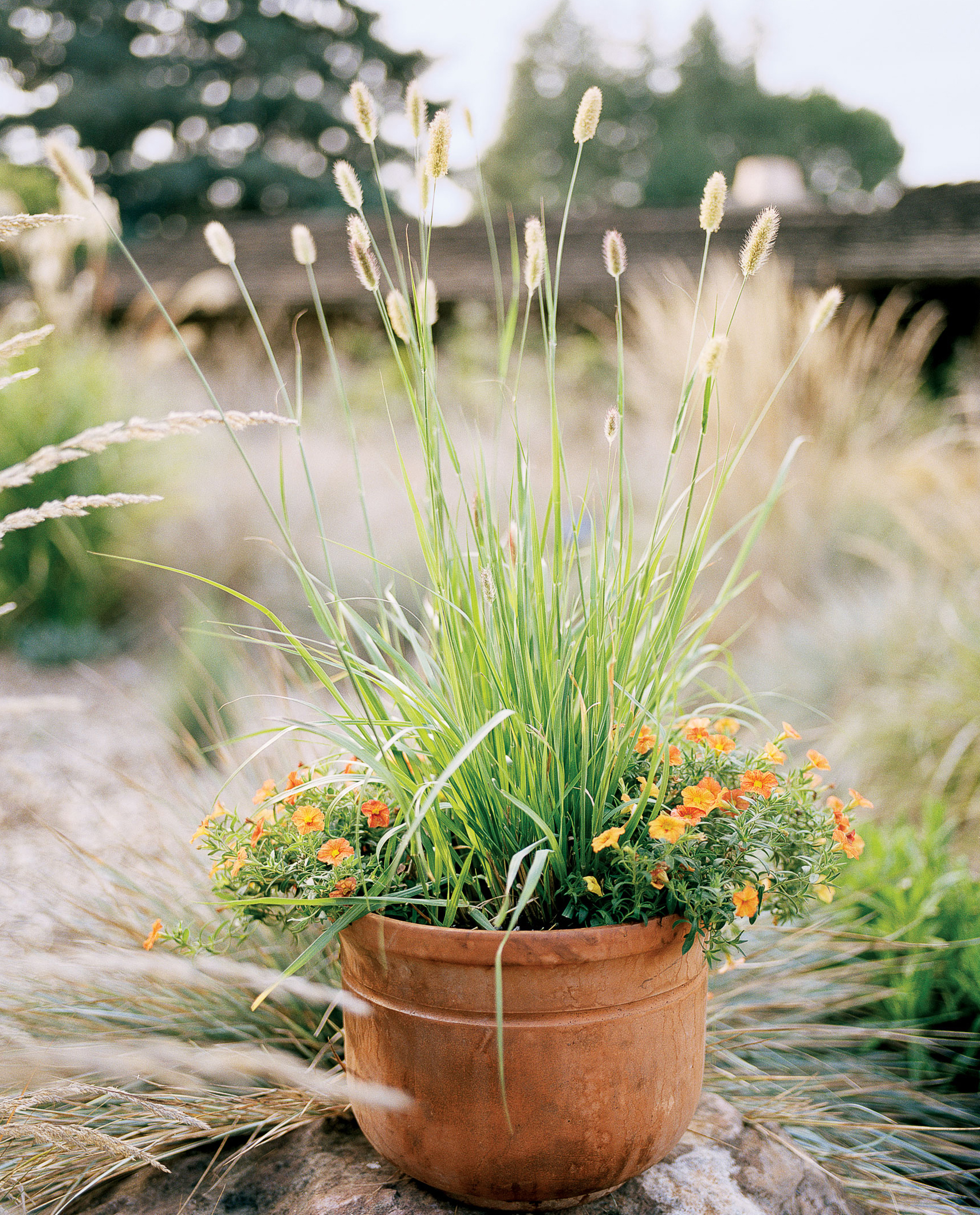 10 favorite ornamental grasses sunset magazine gardening with ornamental grasses autumn allure workwithnaturefo