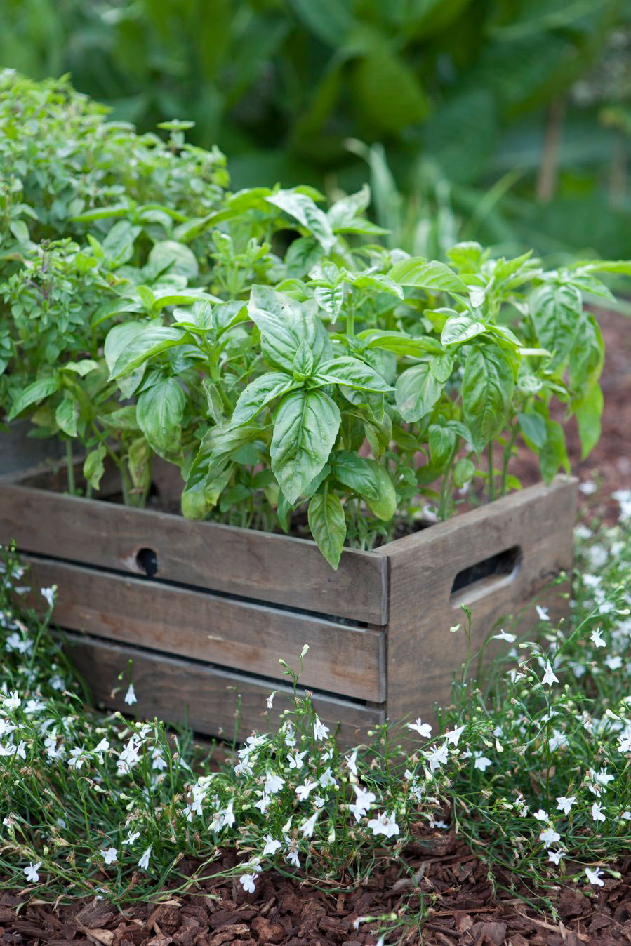Beautiful Herb Garden Designs