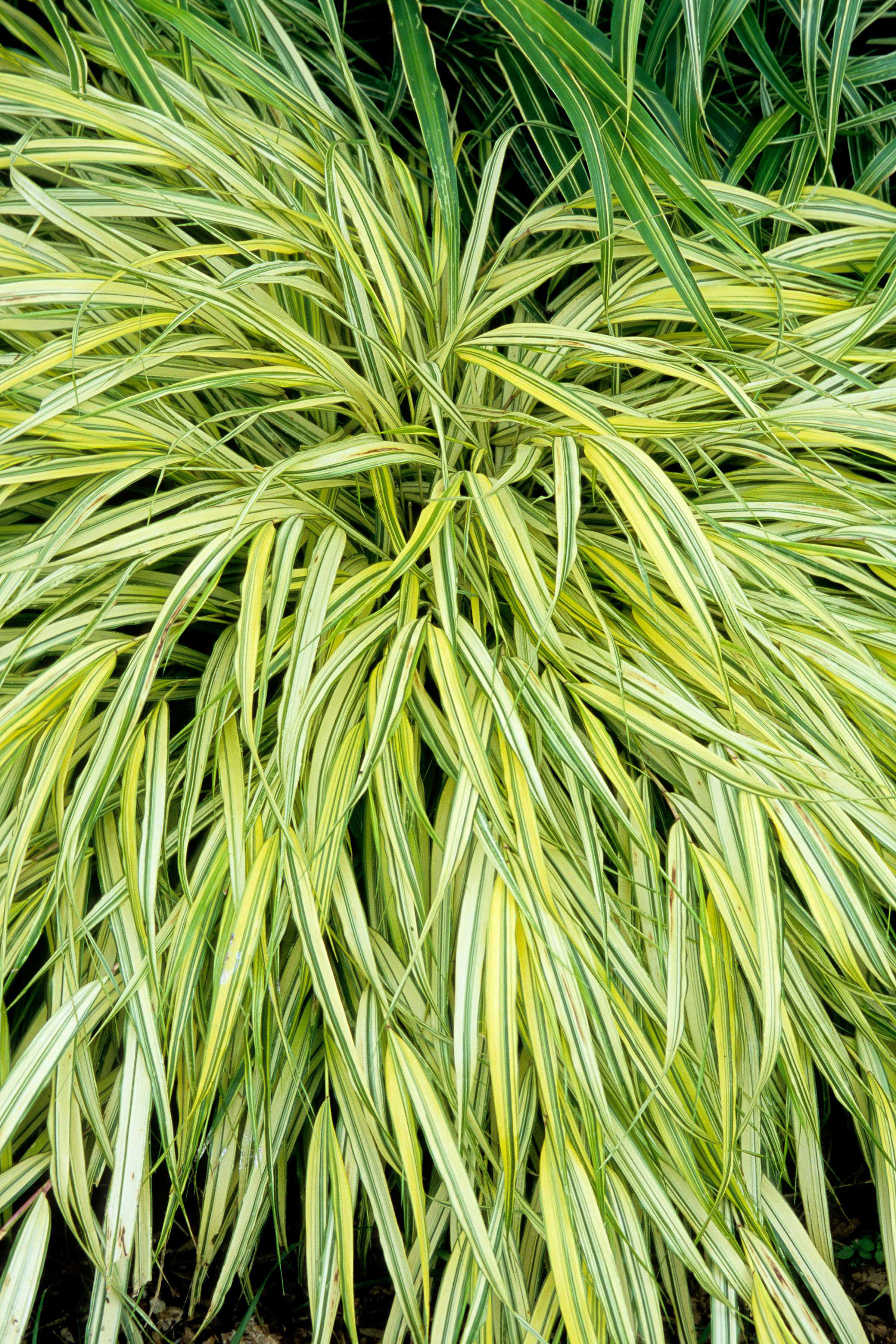 20 best shade plants for containers sunset magazine for Oriental grass plants