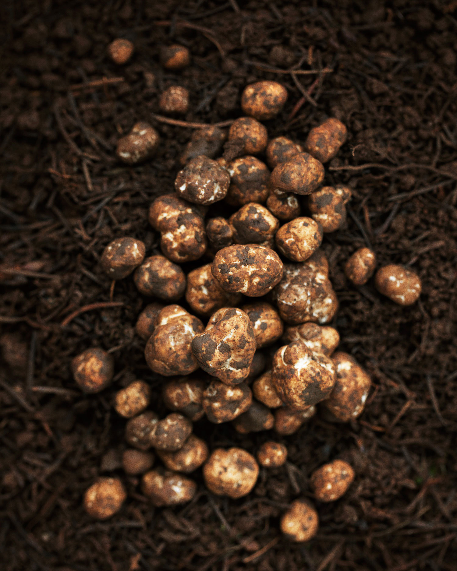 Oregon's Truffle Treasure