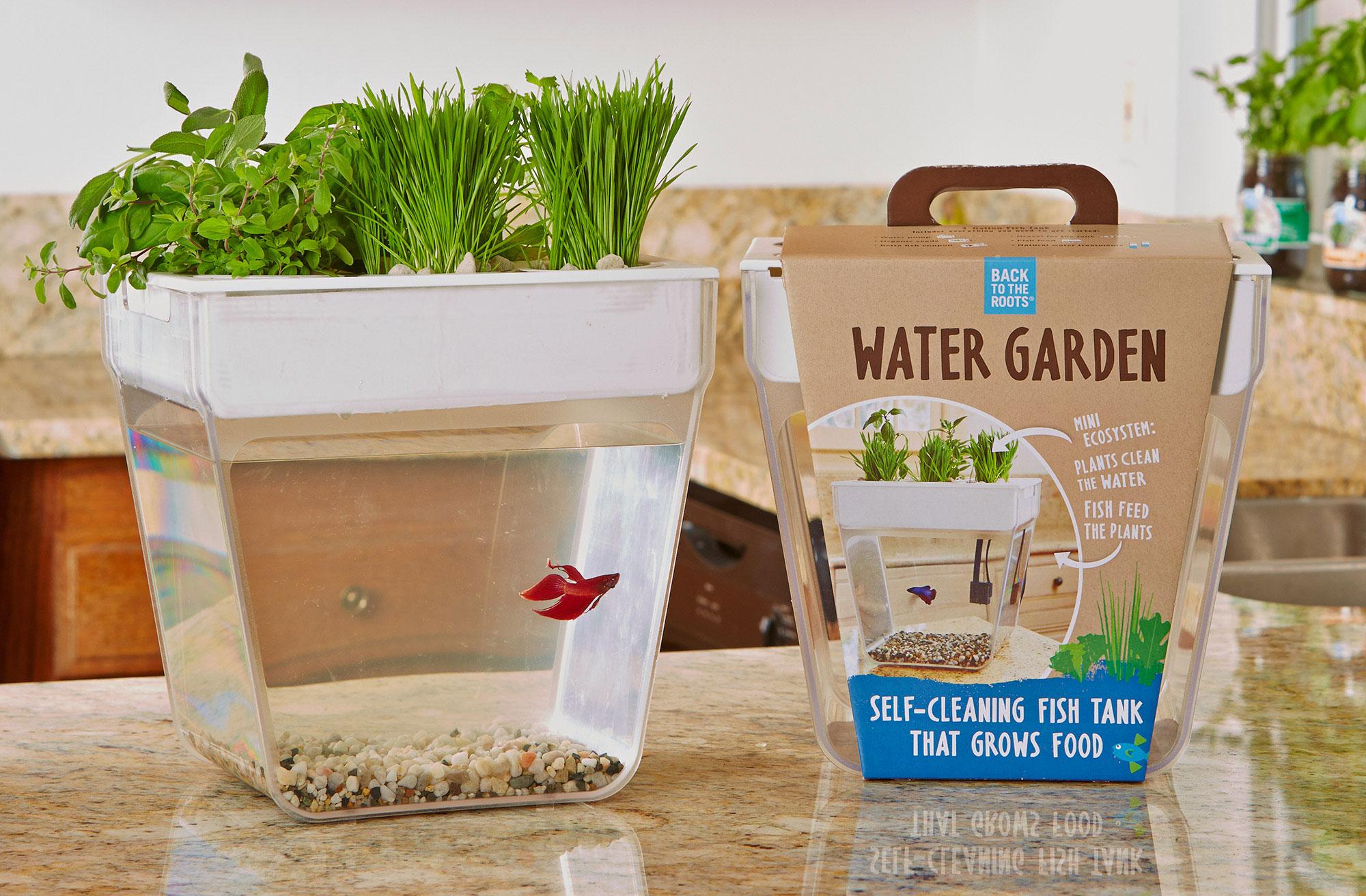 Mini Water Garden
