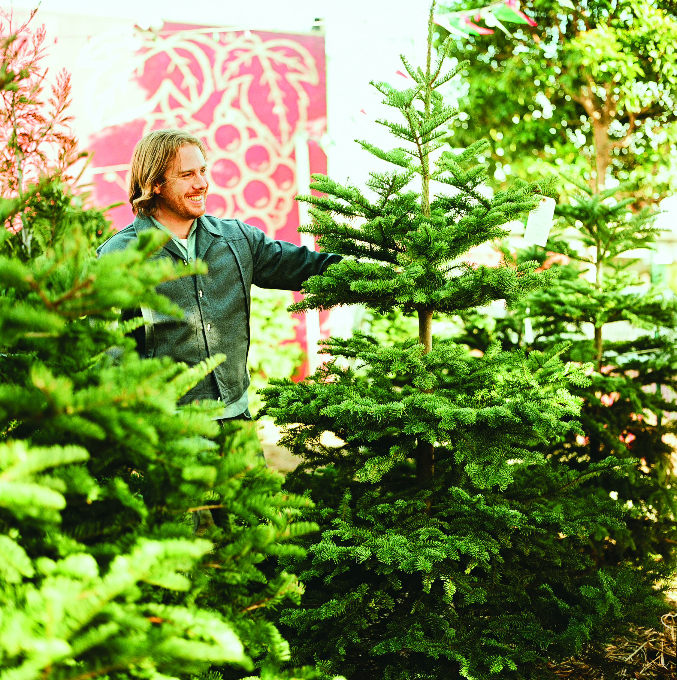 Living Christmas Tree.The Best Living Christmas Trees For A Festive Holiday Season