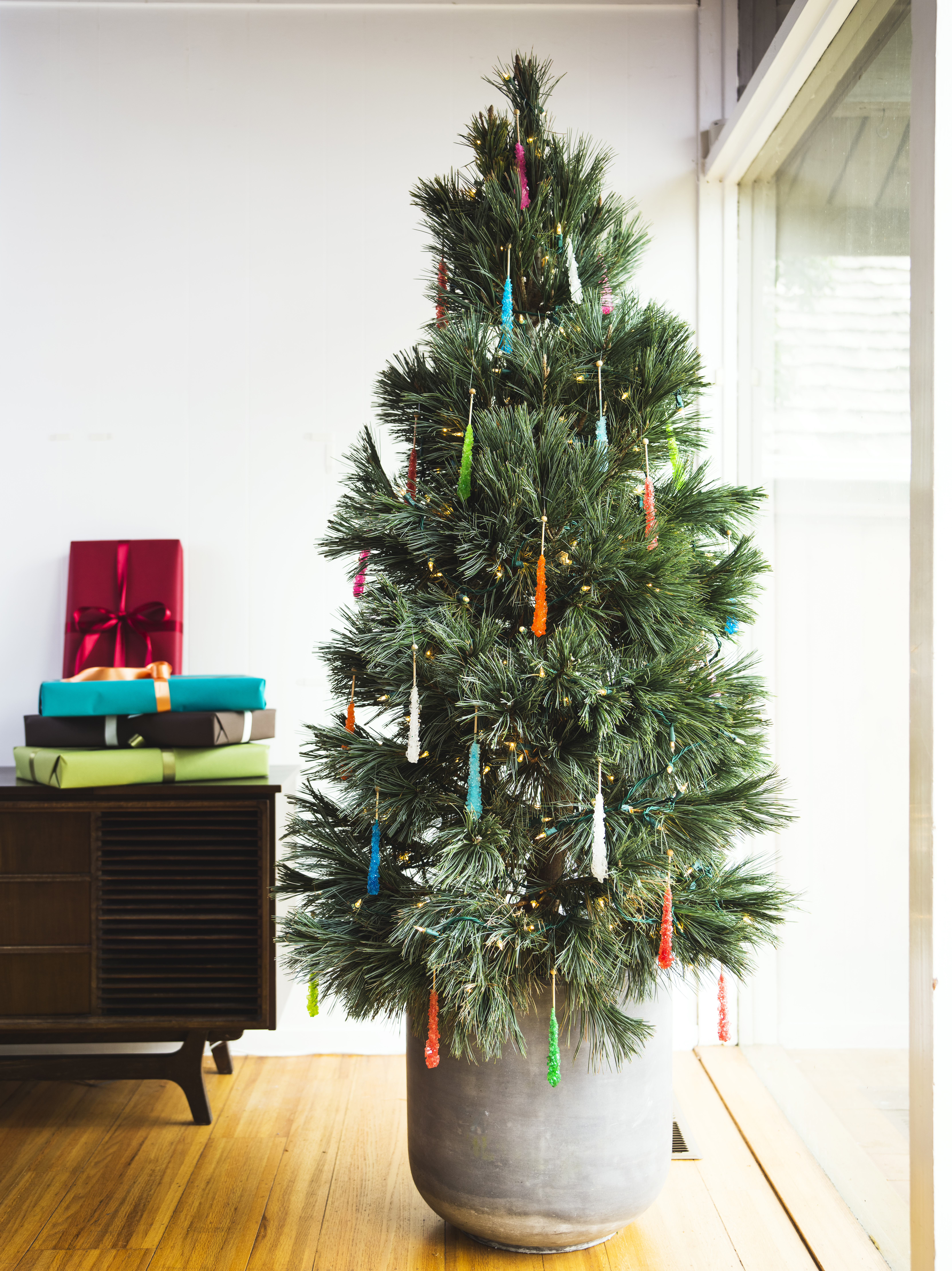 11 Sustainable Christmas Tree Choices - Sunset Magazine
