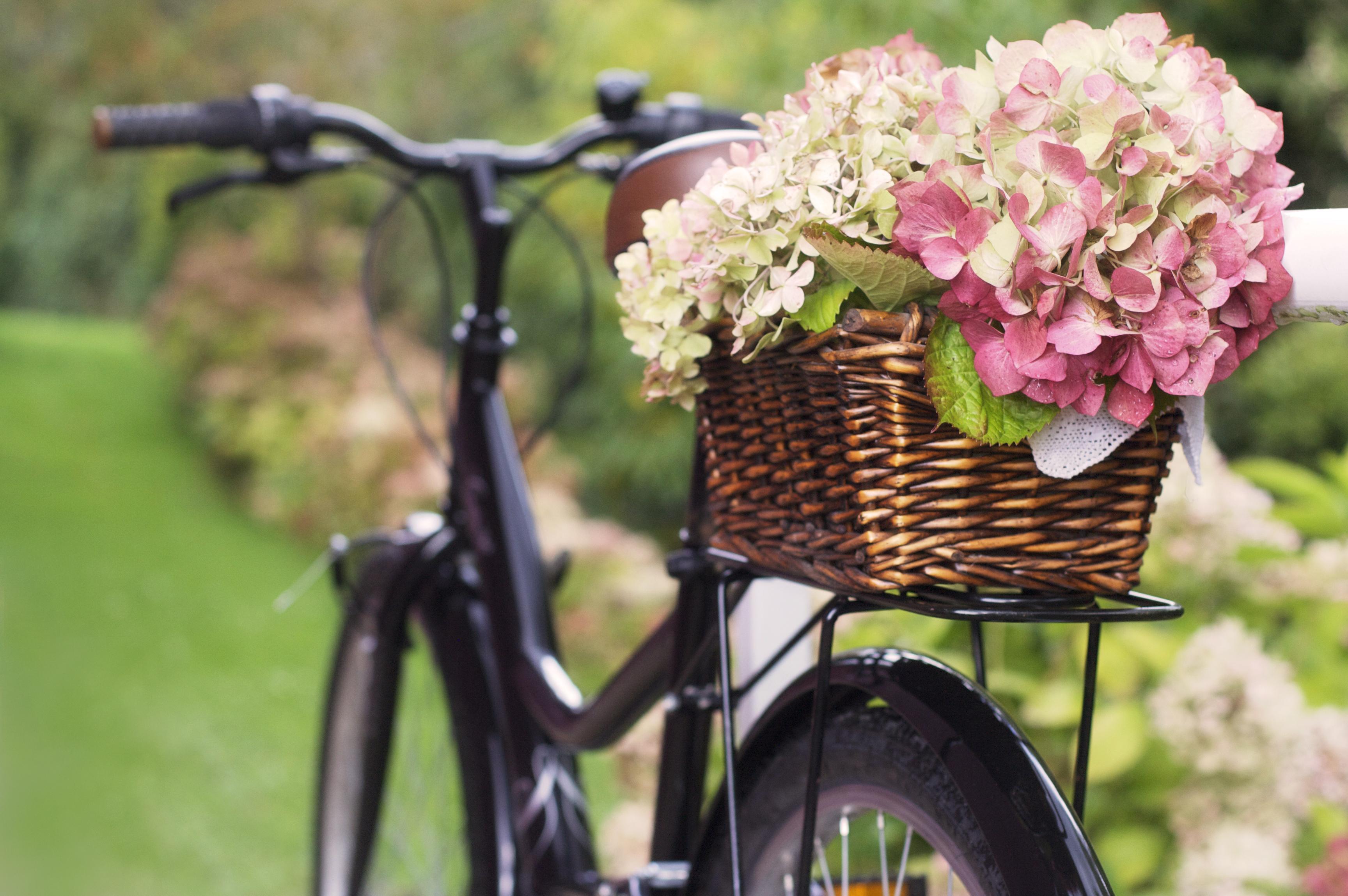 The Secret To Drying Hydrangeas And Other Botanicals Sunset Magazine